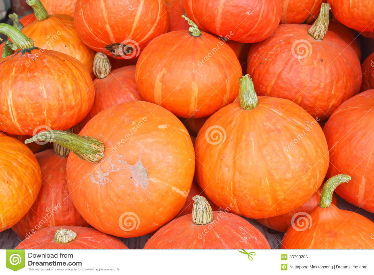 Many Of The Beautiful Orange Pumpkins Lined Stock Photo
