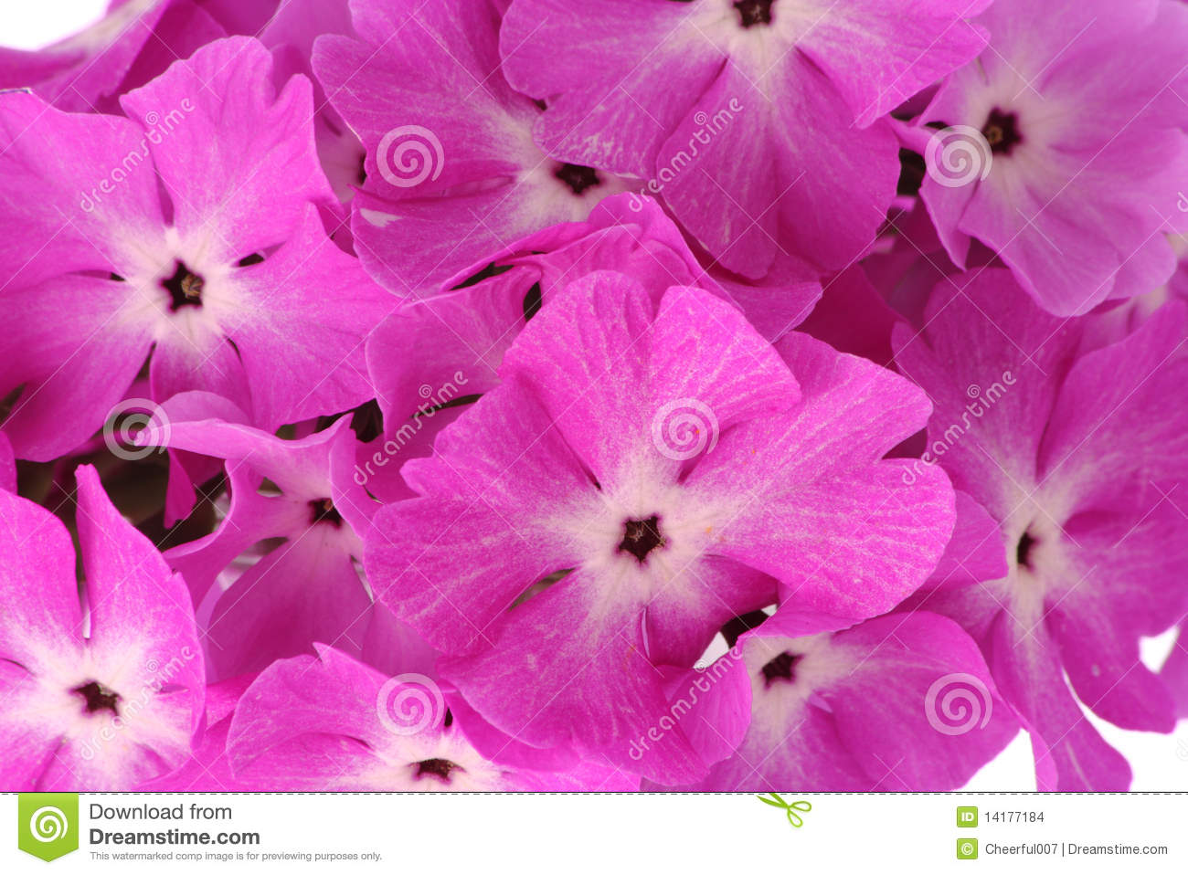 Beautiful background with pink flowers with heart-looking lobes.