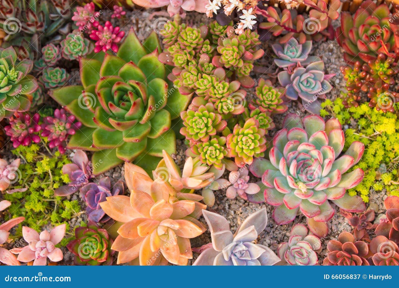 Many beautiful succulents
