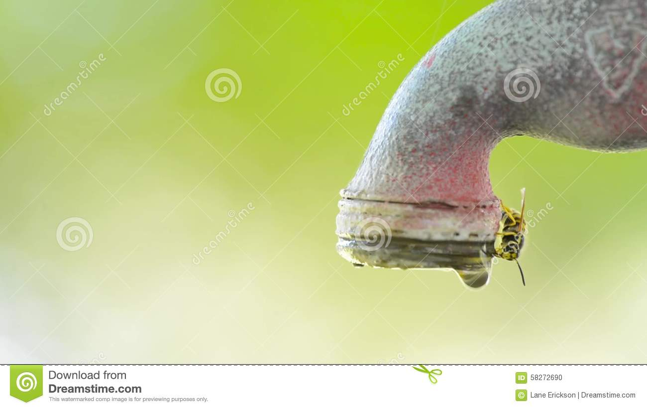 Many Bees Gathering Water At Dripping Faucet Stock Footage - Video ...