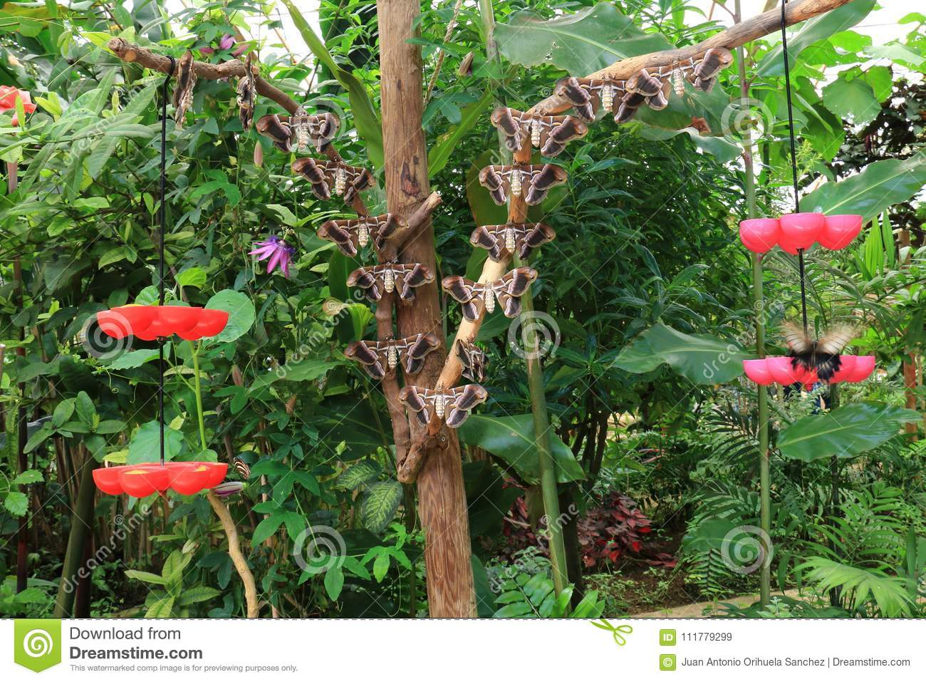 Many butterflies perched on branches