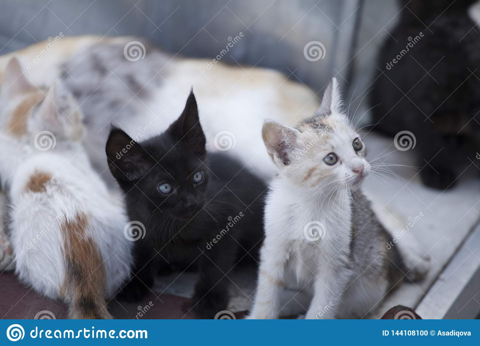 Many Cats Sitting In A Row Cute Cats Stock Photo Image Of Home Background 144108100