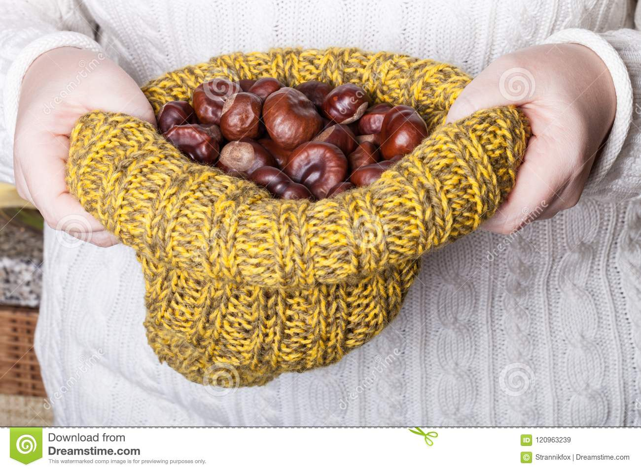 Many chestnuts in human hands