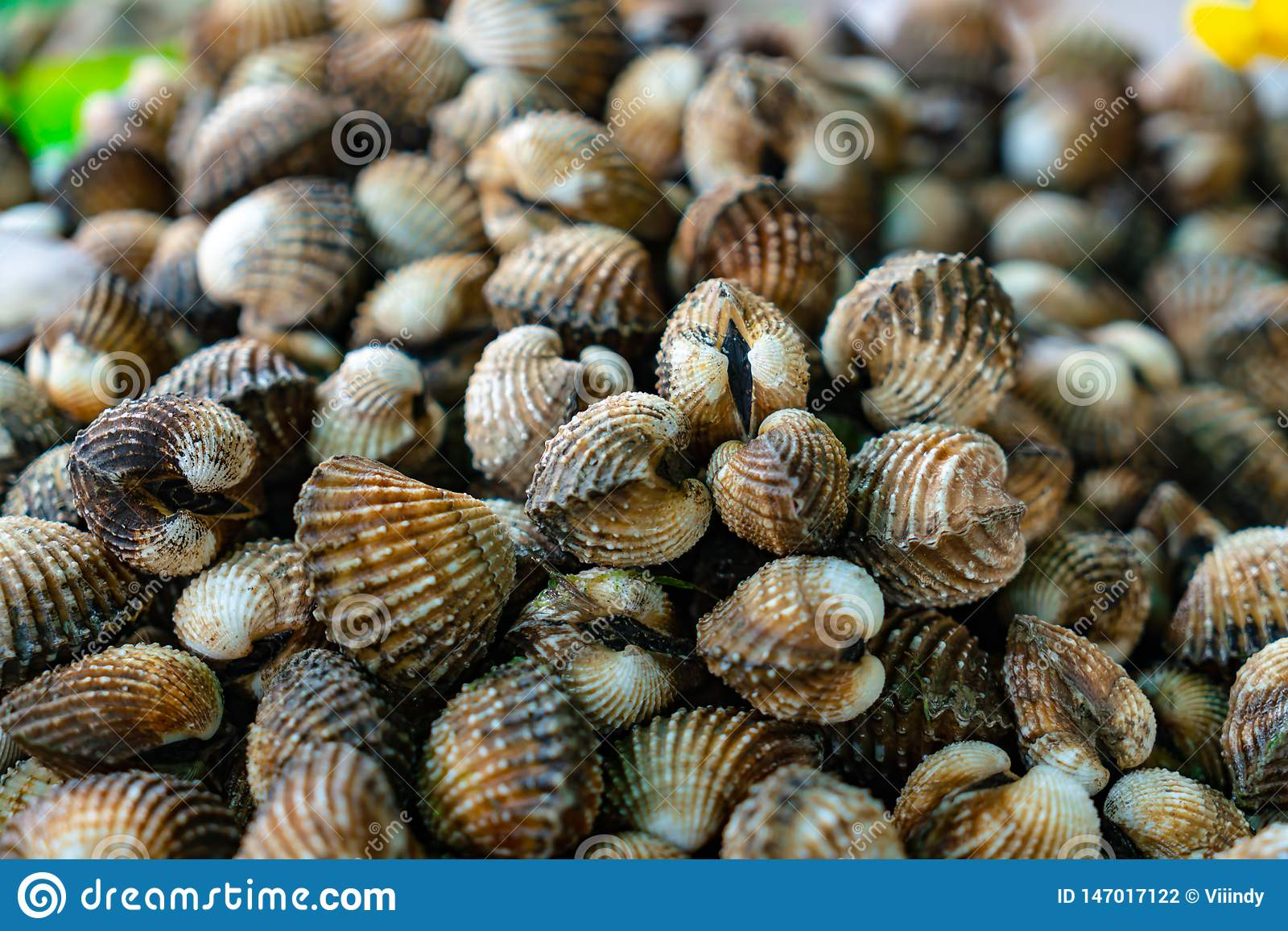 Many clean fresh cockles are stacked together and made into seafood.