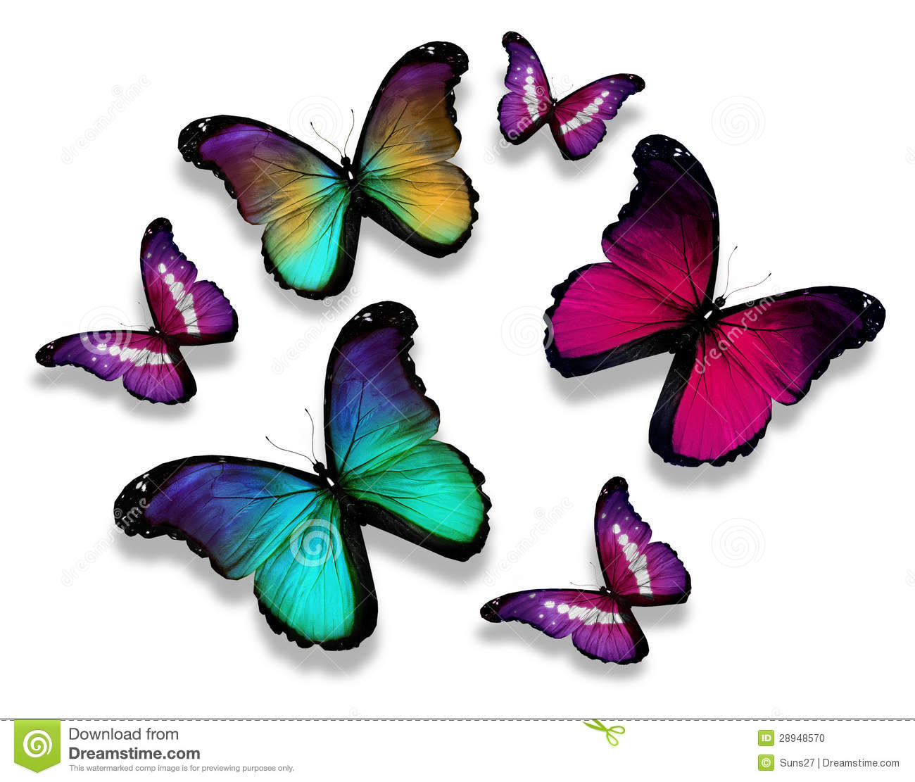 many different butterflies on white background stock photo