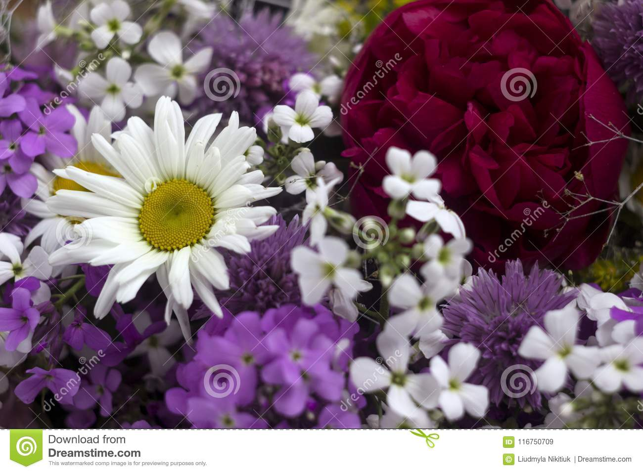 Many Different Kinds Of Flowers Purple And Violet Phlox Chamomile