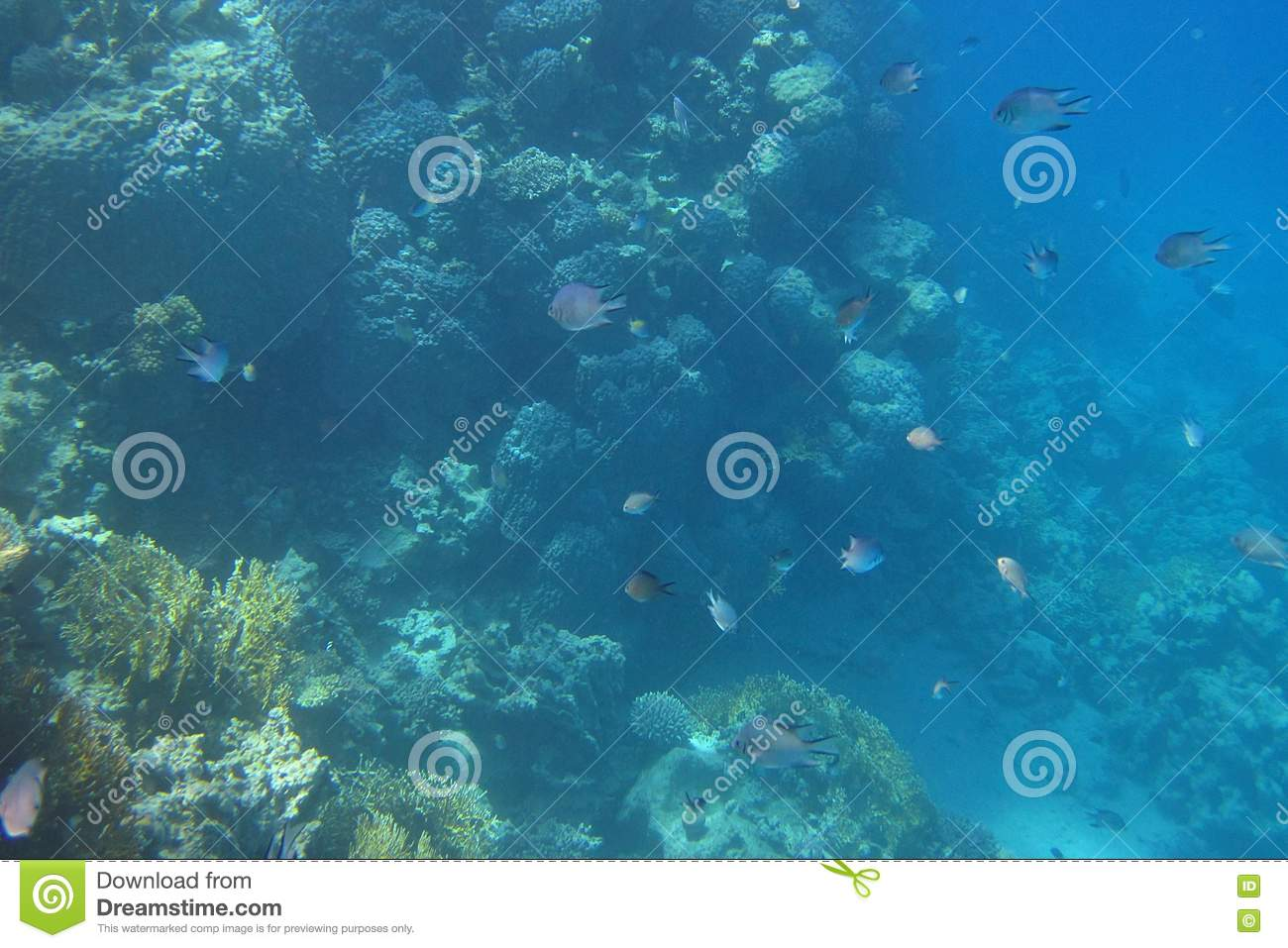 Many fish egypt stock images image 20941714 for How many fish are in the ocean