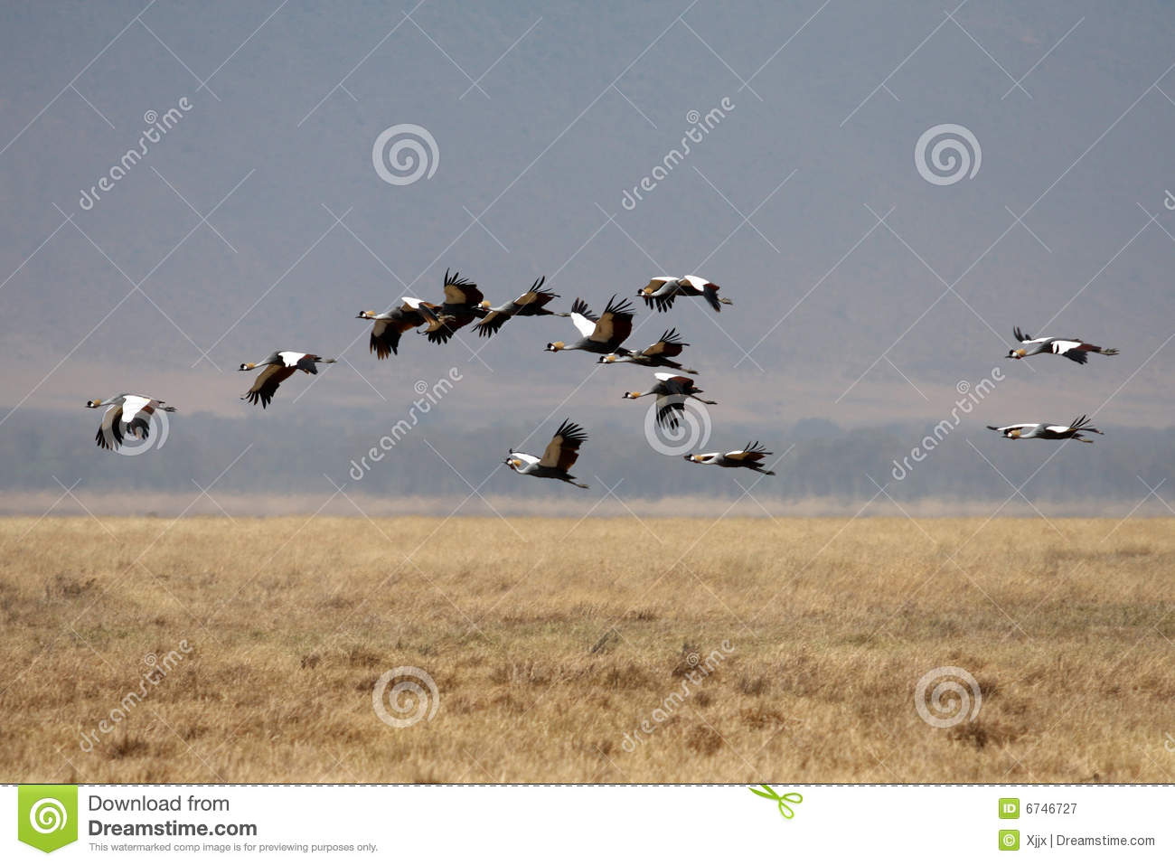 Royalty Free Stock Photography Many Flying Birds Africa Savanna Image6...