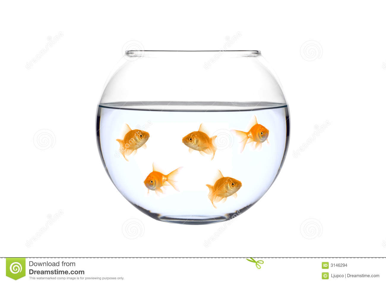 Many golden fish in a bowl stock photo image of scene for How to make a fish bowl
