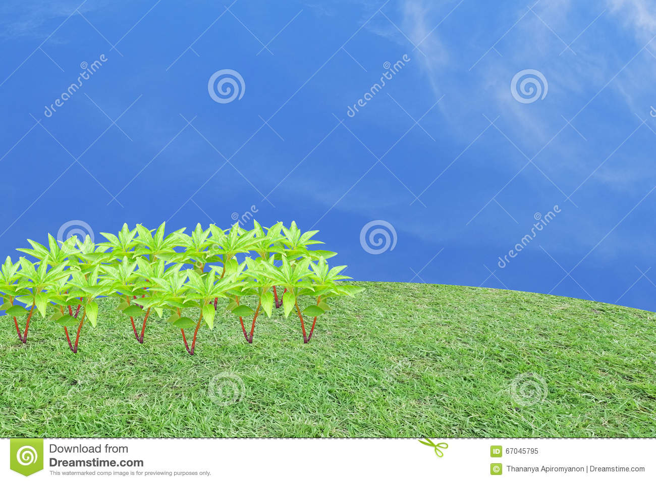 Many Henna Trees In The Left Side Of Frame On The Grass Field In
