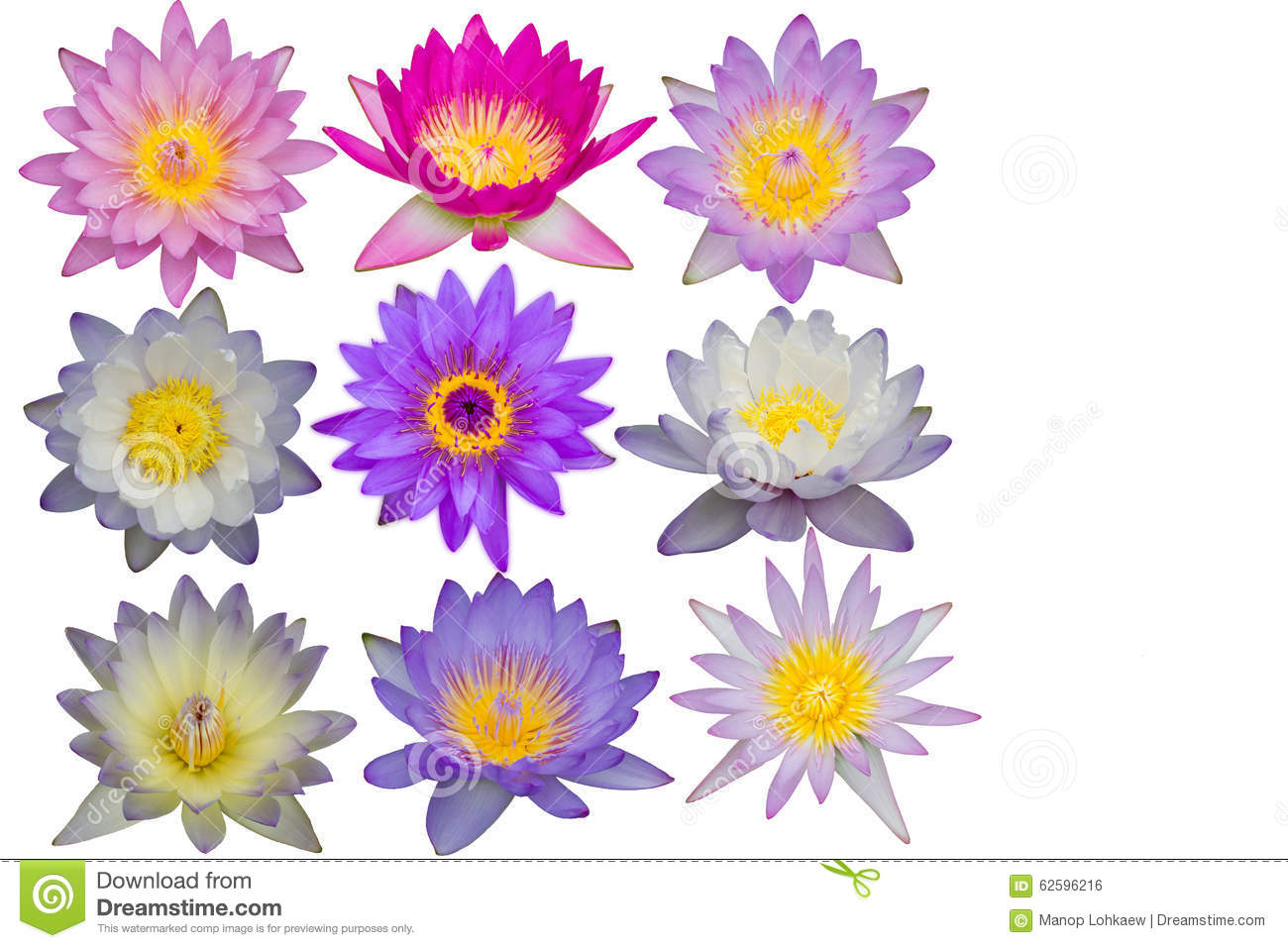 Many kinds of lotus flowers texture isolated on white background download many kinds of lotus flowers texture isolated on white background stock photo image of mightylinksfo