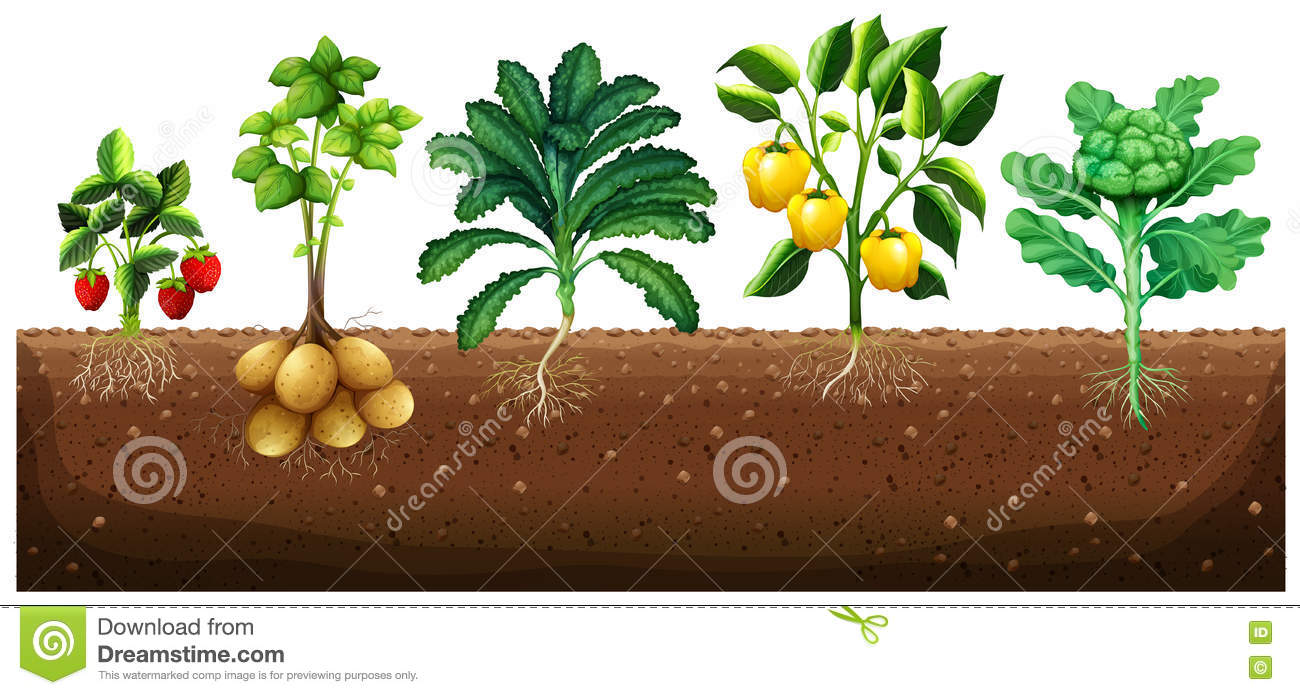 Many kinds of vegetables planting on ground