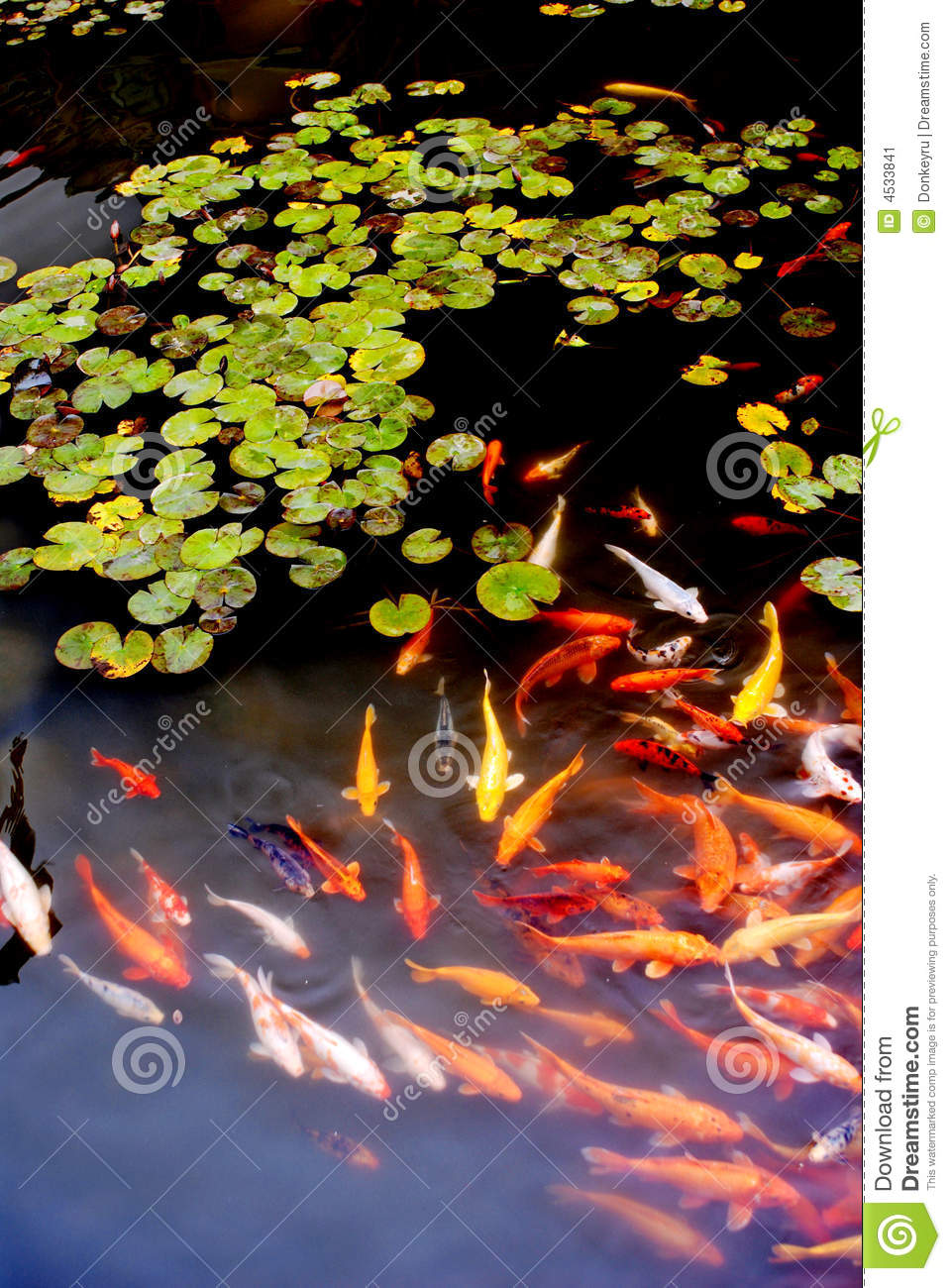 Many koi in lotus pond stock image image 4533841 for Chinese koi pond