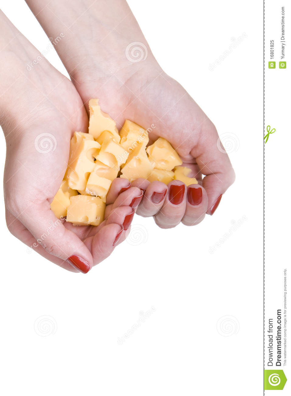 Many Pieces Of Cheese In Your Hands Royalty Free Stock