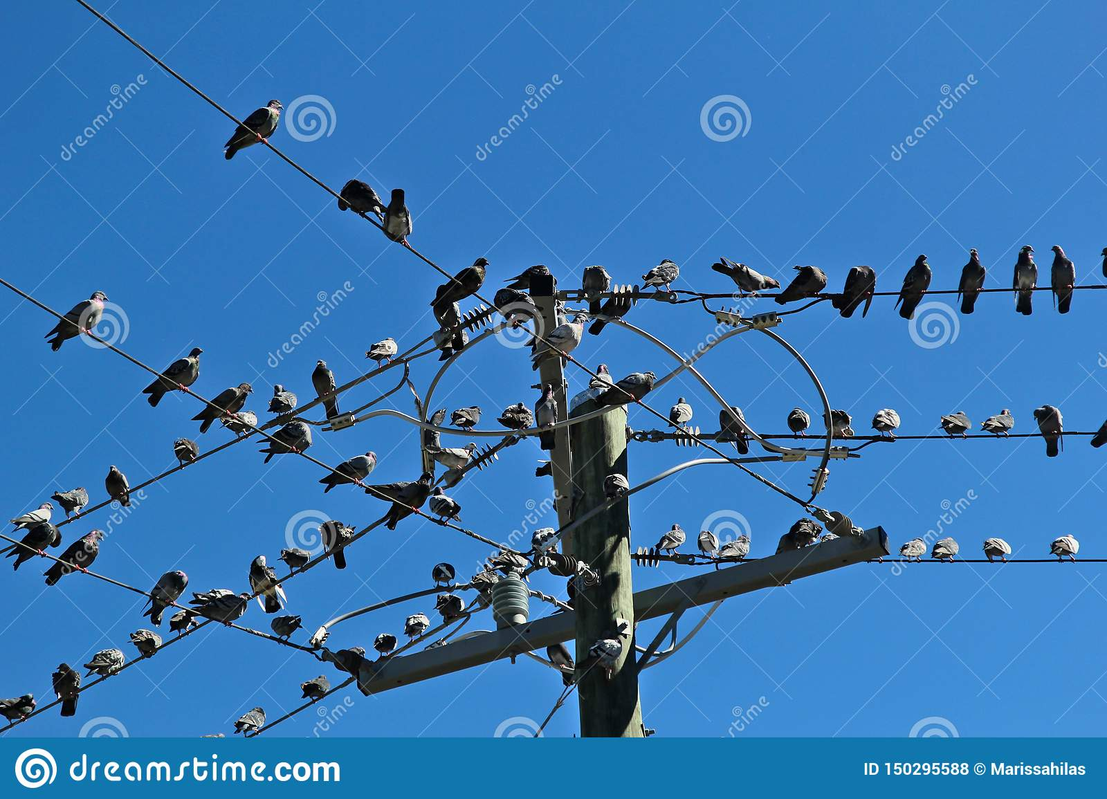 Many pigeons sat on a some wires