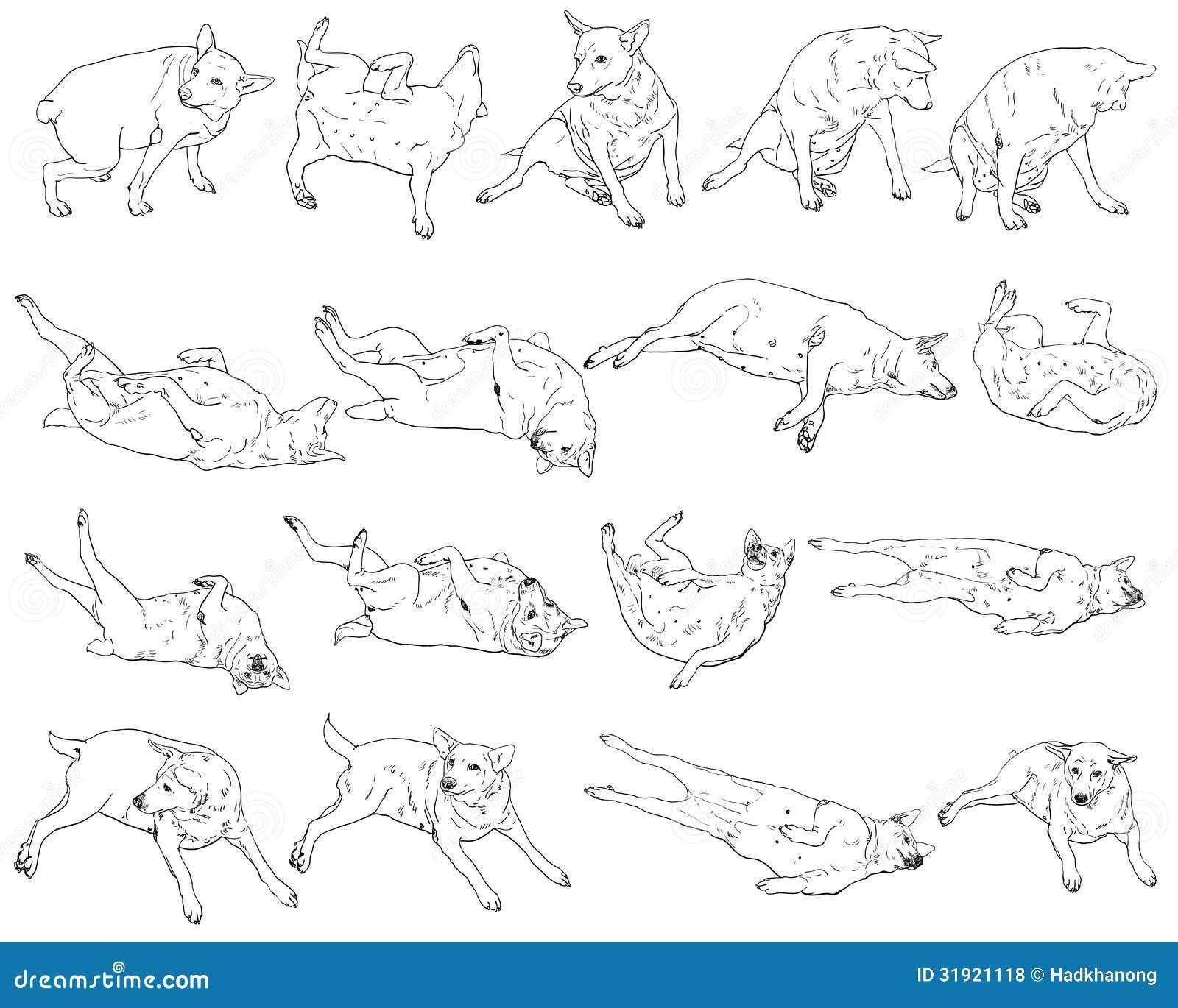 Many Pose Of Dog Royalty Free Stock Photos - Image: 31921118