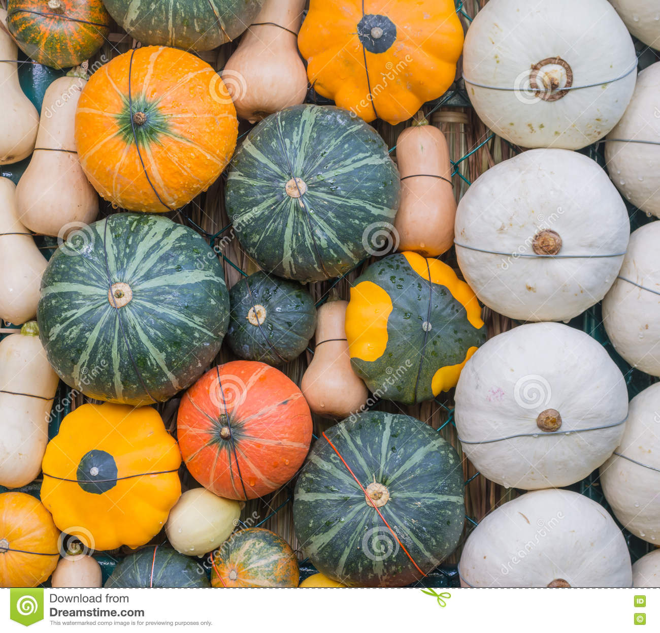 Many Of Pumpkin Decoration On The Wall Stock Photo - Image: 76090719