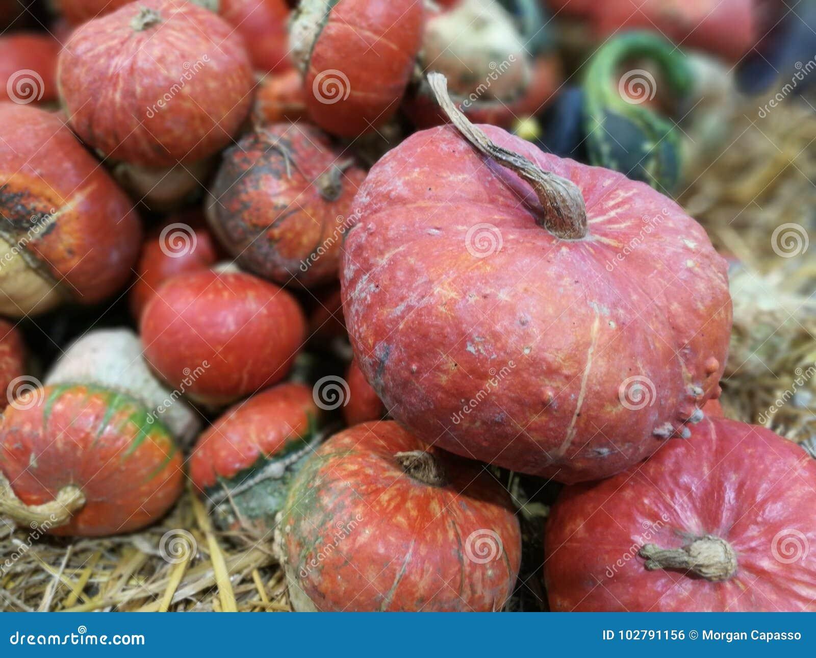 Many pumpkins on a farmers market