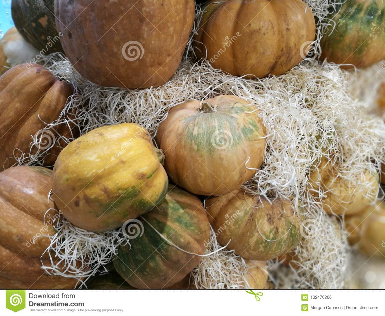 Many pumpkins on a farmers market