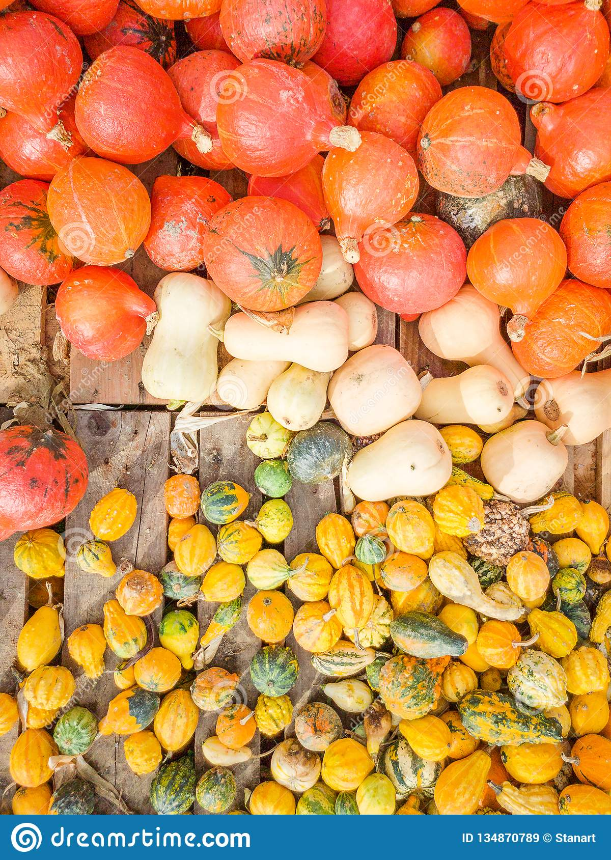 Many red pumpkins or winter squash on farmers market