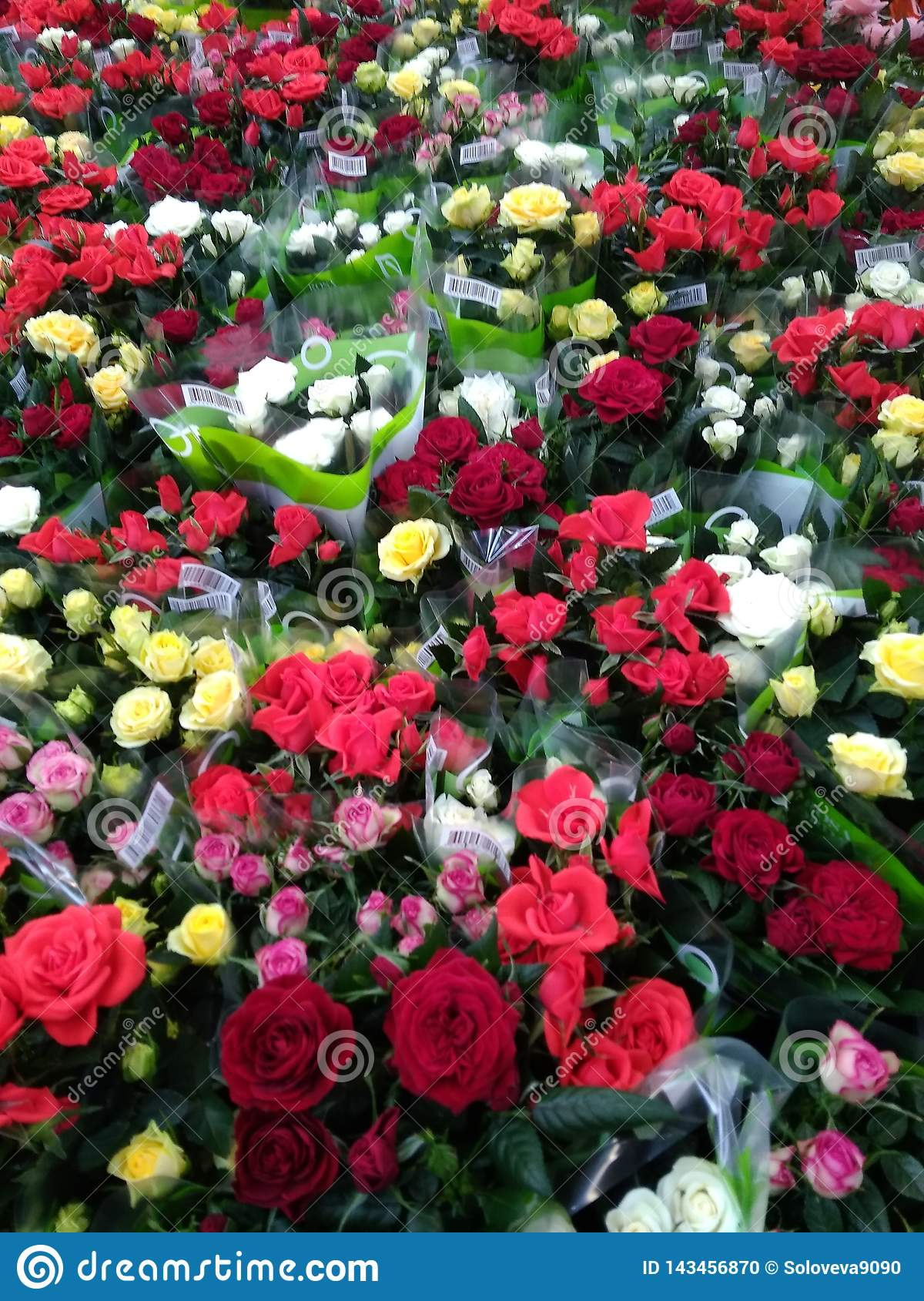 Many roses of different colors