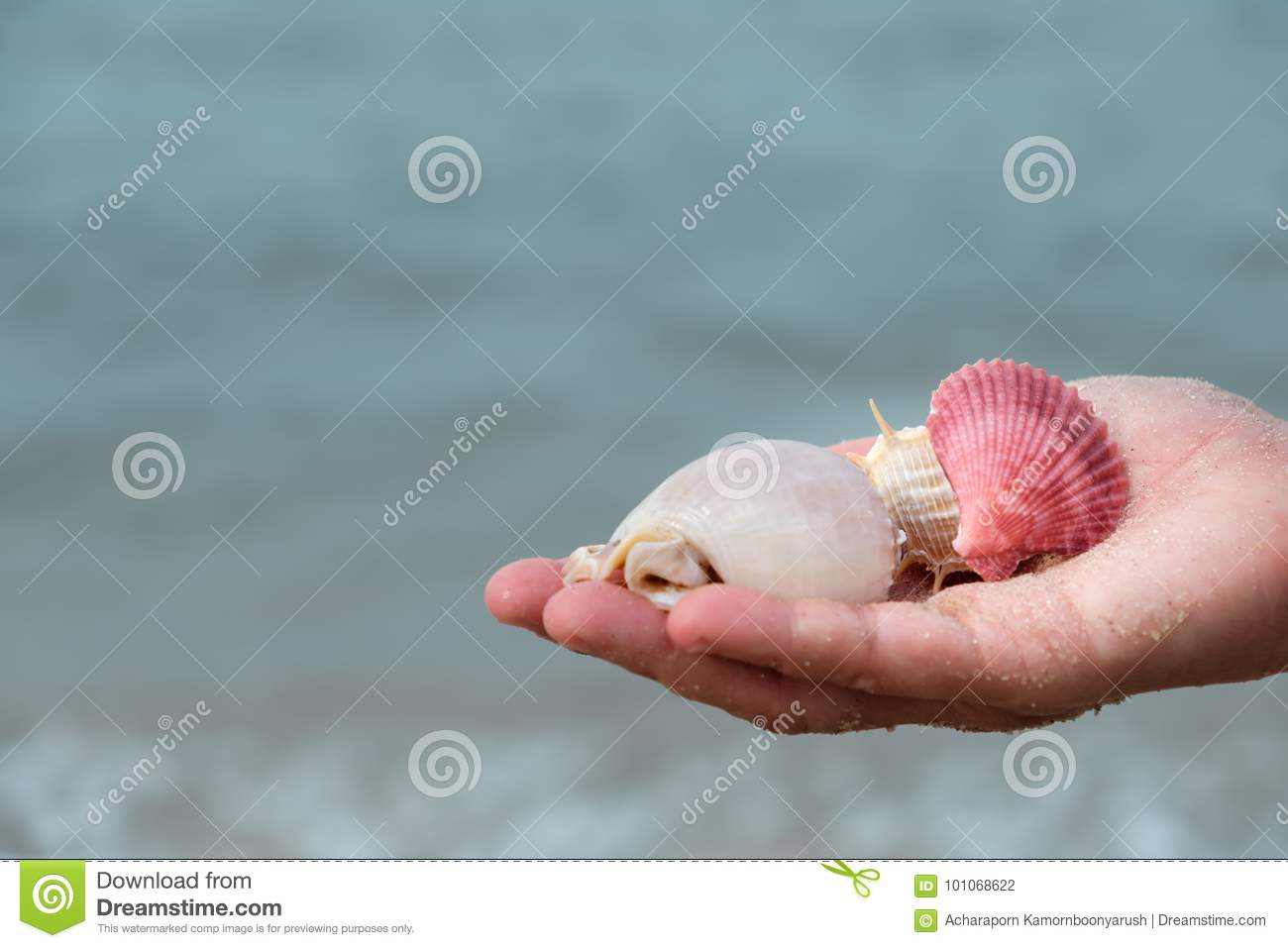 Many shells on woman`s hands