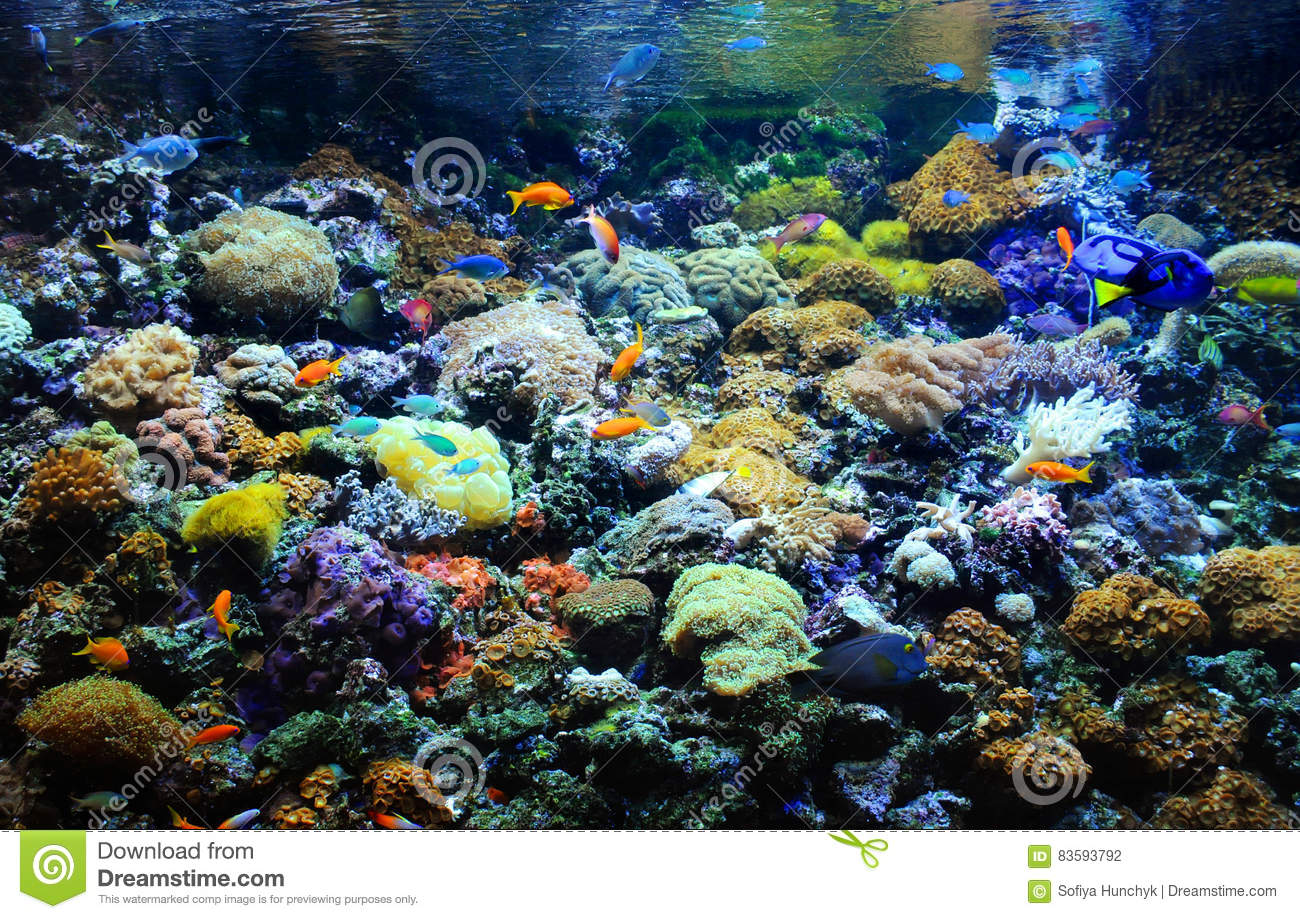 Many small fish in the coral reef