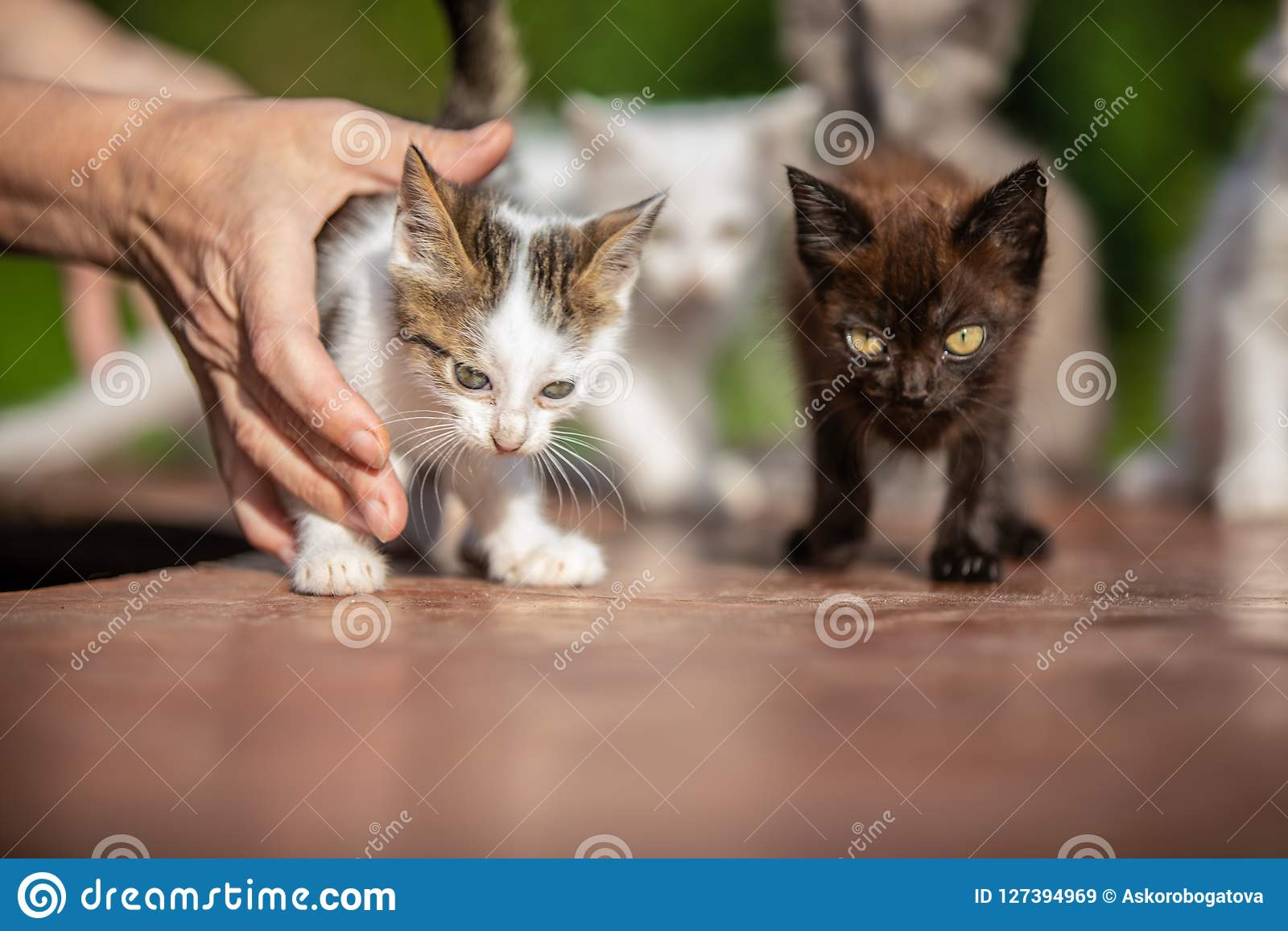 Many small kittens in the hands of a woman on blurred background