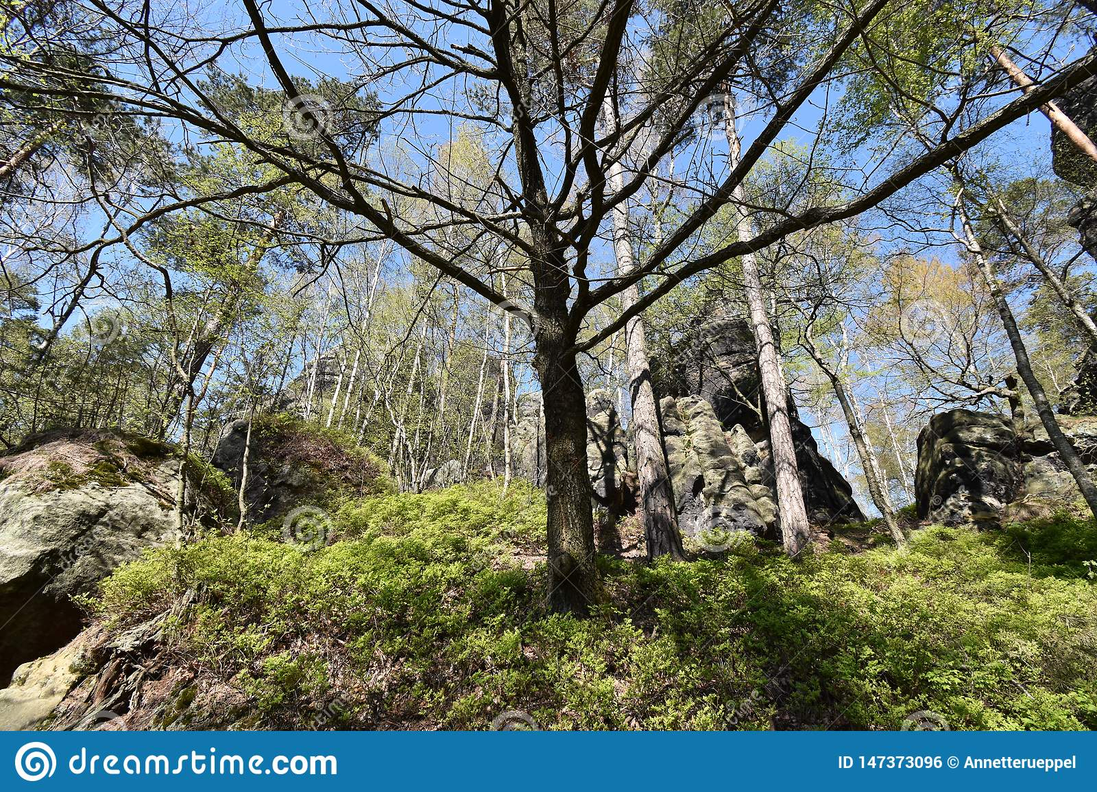 Many trees at the green hiking trail in spring at Elbe Sandstone Mountains in beautiful Saxon Switzerland near Bohemian Switzerlan