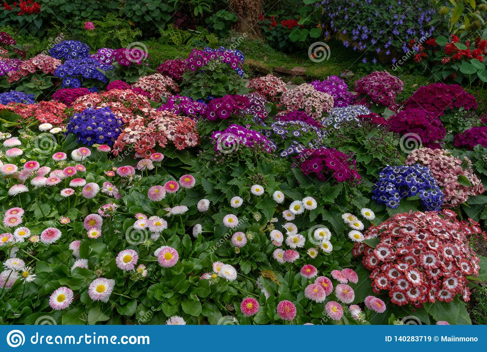 Many varieties of colorful and lovely winter flowers in a botanic garden in Chiang Mai, Thailand.