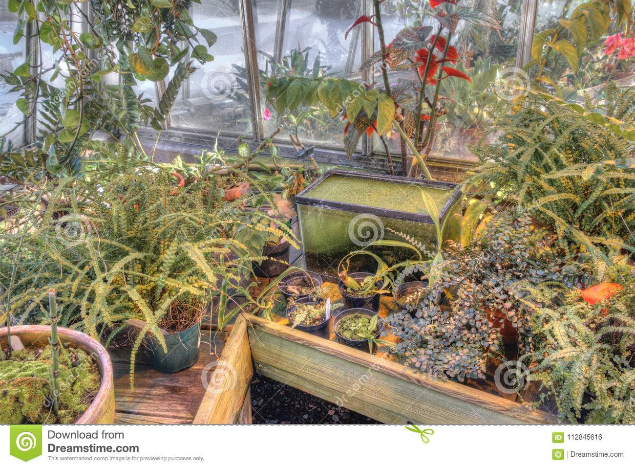 Plants Growing In A Greenhouse In Winter Stock Photo - Image ... on winter potted plants, winter shade plants, winter blooming plants, winter porch plants, winter container plants, winter hibiscus, winter yard plants, winter deck plants, winter perennial plants, winter interest plants, winter flowering plants, winter fragrant plants, winter house landscaping, winter planter plants, winter house art, winter hardy plants, winter outdoor plants, winter house cookies, great winter plants, winter patio plants,