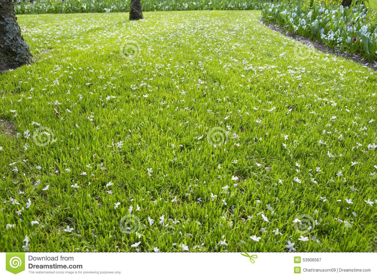 Many White Small Flowers In Top View Of Grass Stock Image Image Of