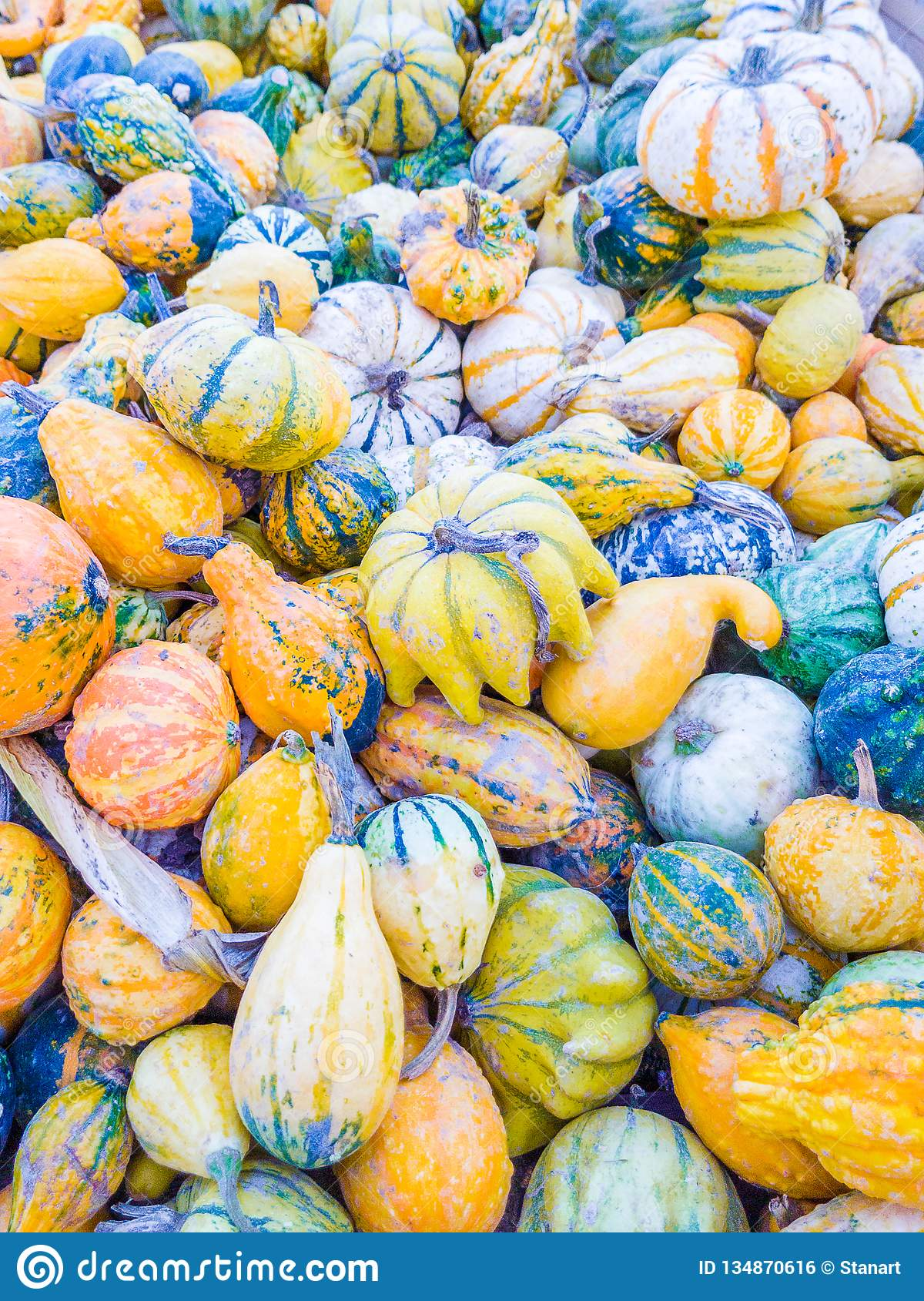 Many winter squash and ornamental pumpkins on farmers market for sale in autumn