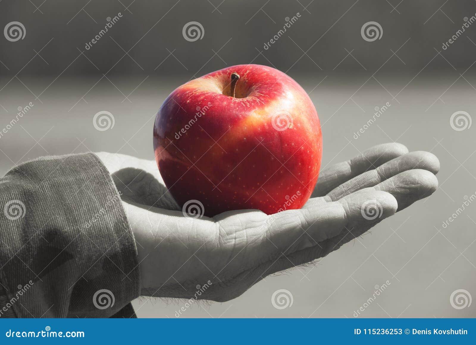 Manzana sólida jugosa joven roja de la fruta bajo luz del sol en un gato viejo para hombre de un hombre mayor, contra fondo un ag