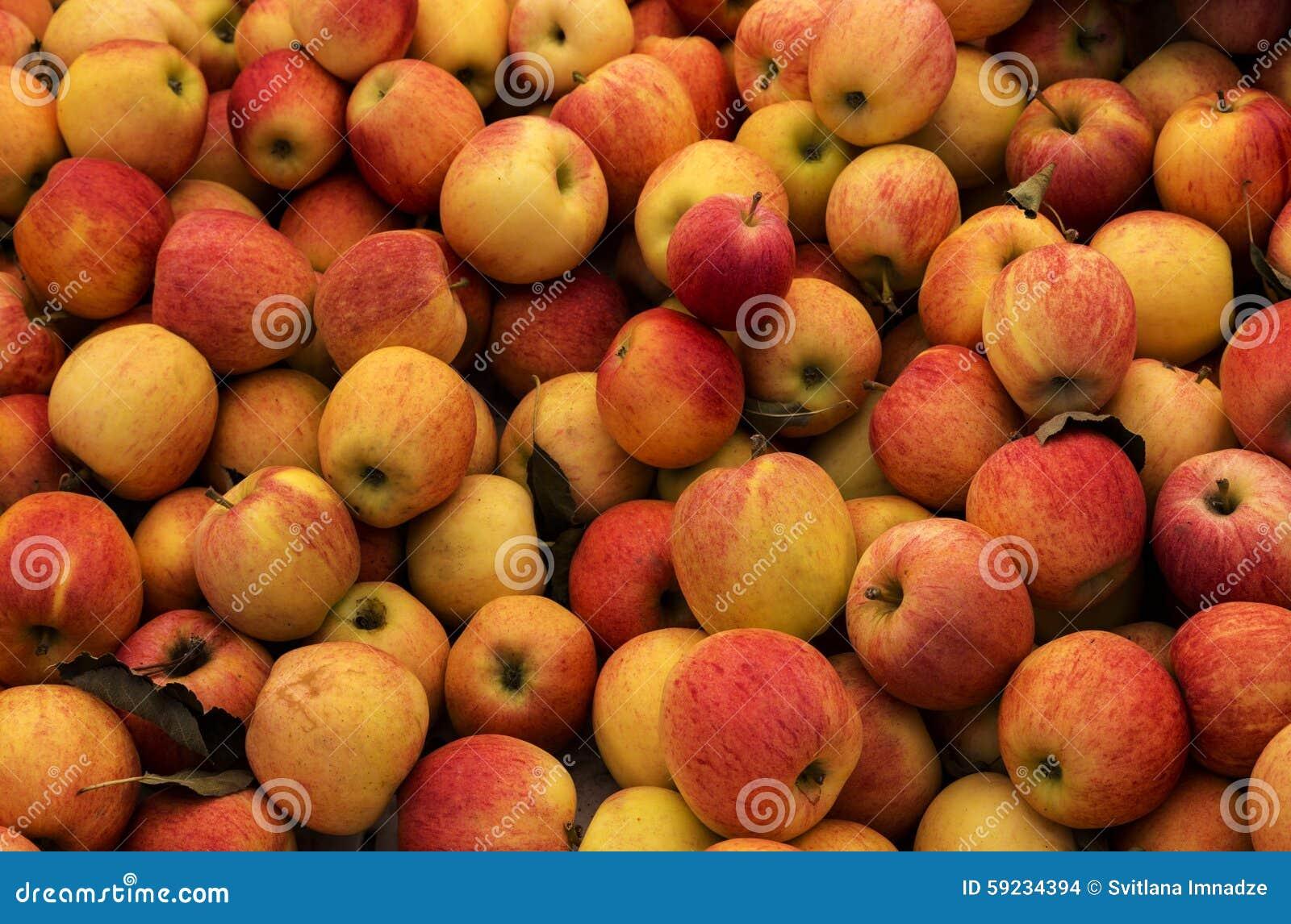 Download Manzanas foto de archivo. Imagen de eating, fruta, manzanas - 59234394