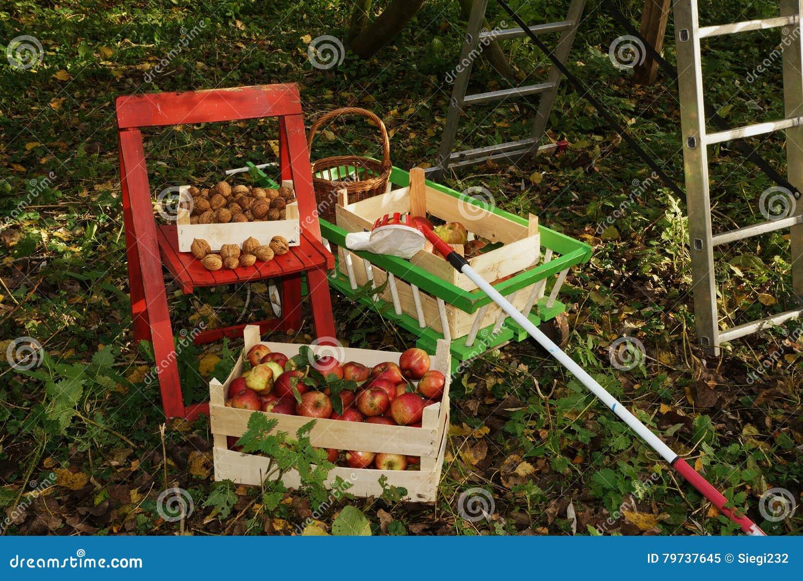 Manzanas orgánicas frescas