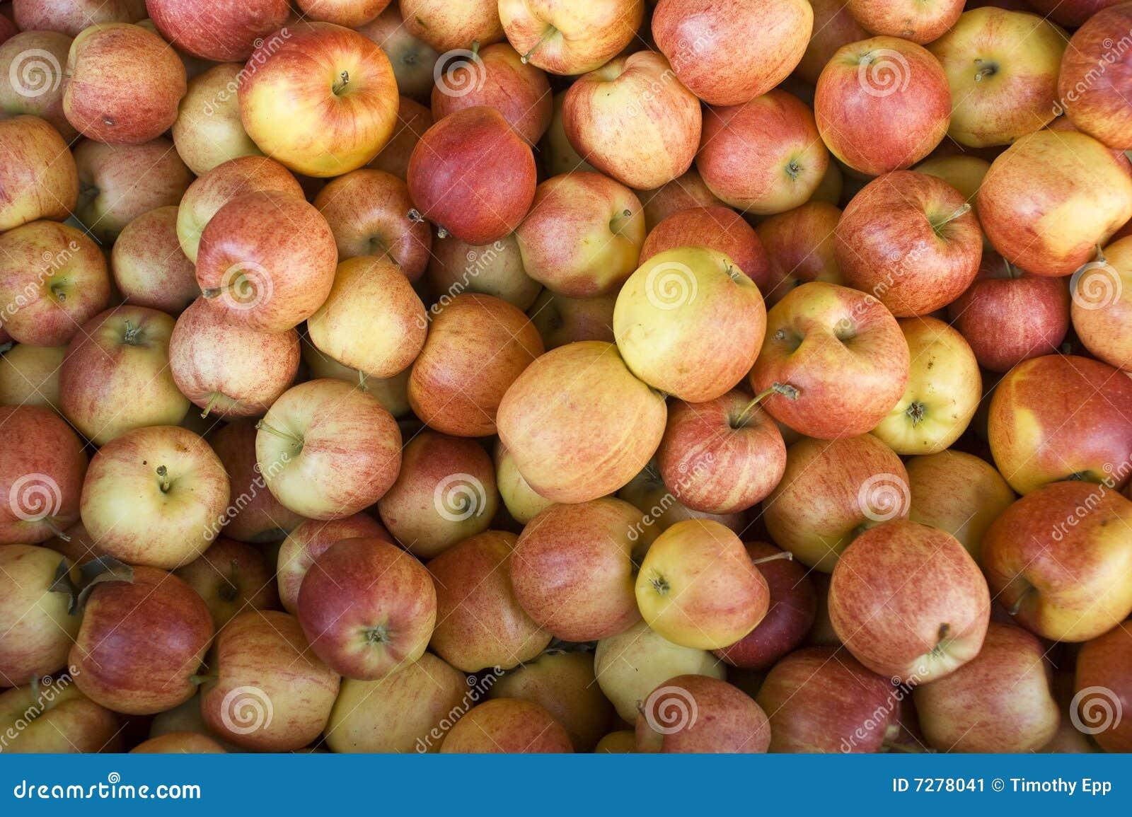 Manzanas reales de la gala