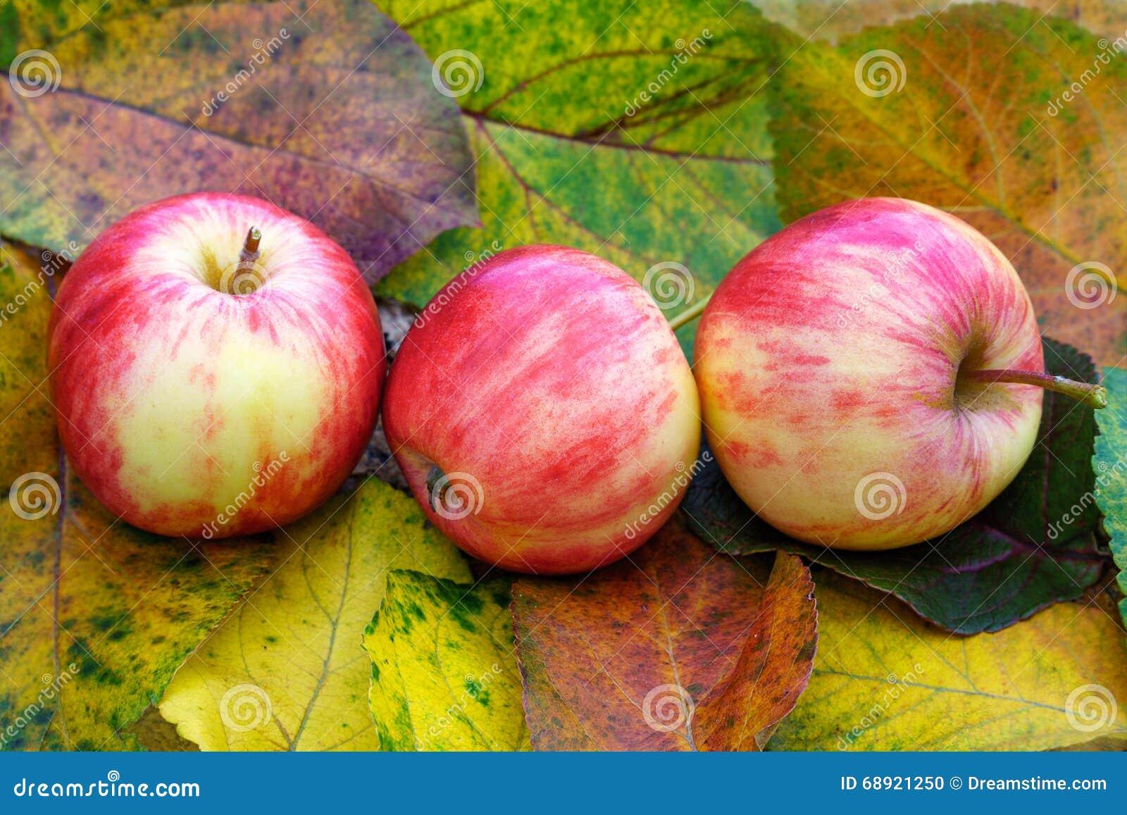 Manzanas y hojas de otoño coloridas
