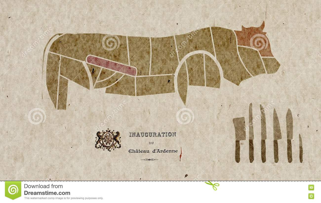 Map Of Cow Body Parts Anatomy For Cuisine Purposes Stock Video ...