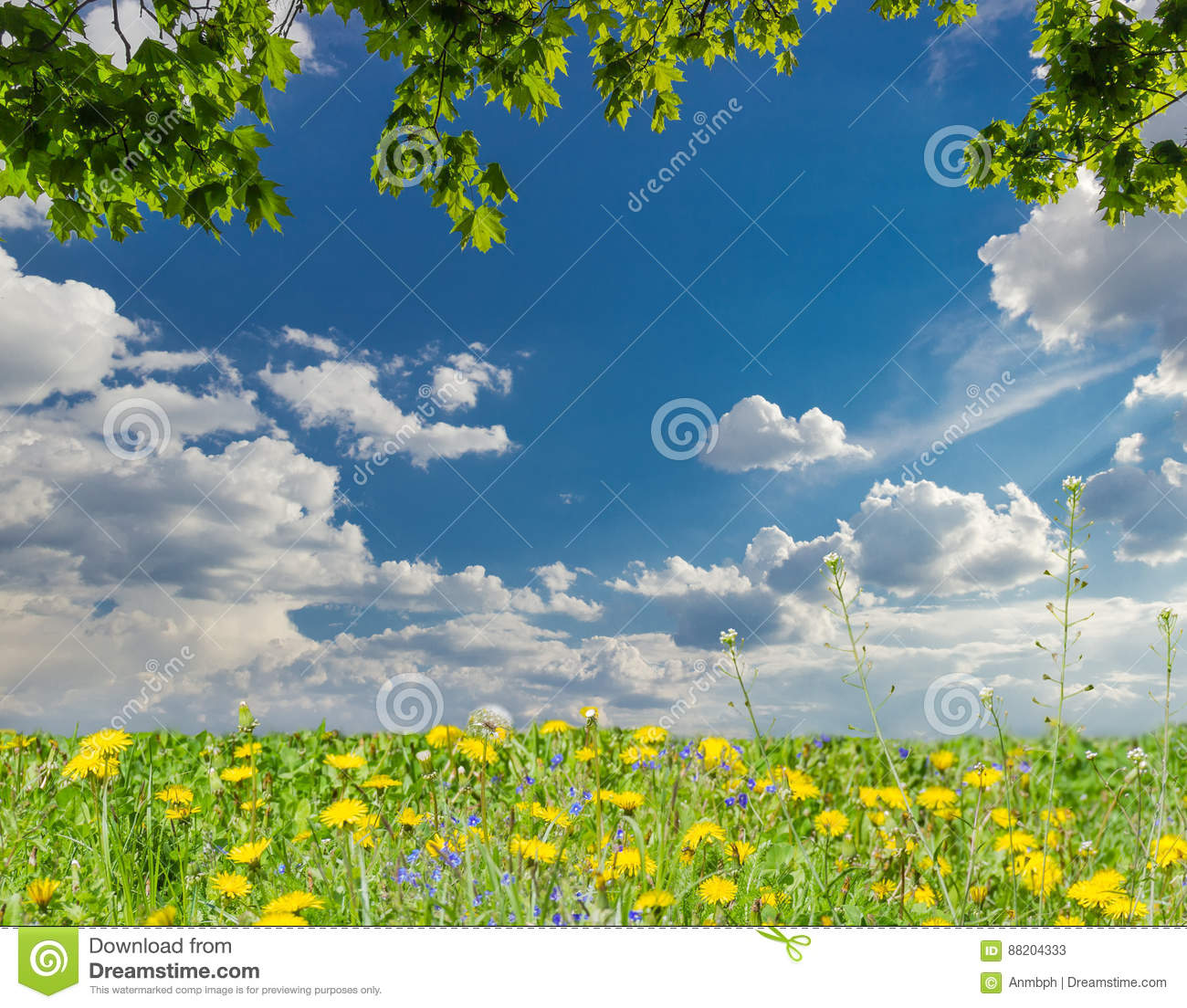 Maple Branches, Sky With Clouds And Lawn With Dandelions