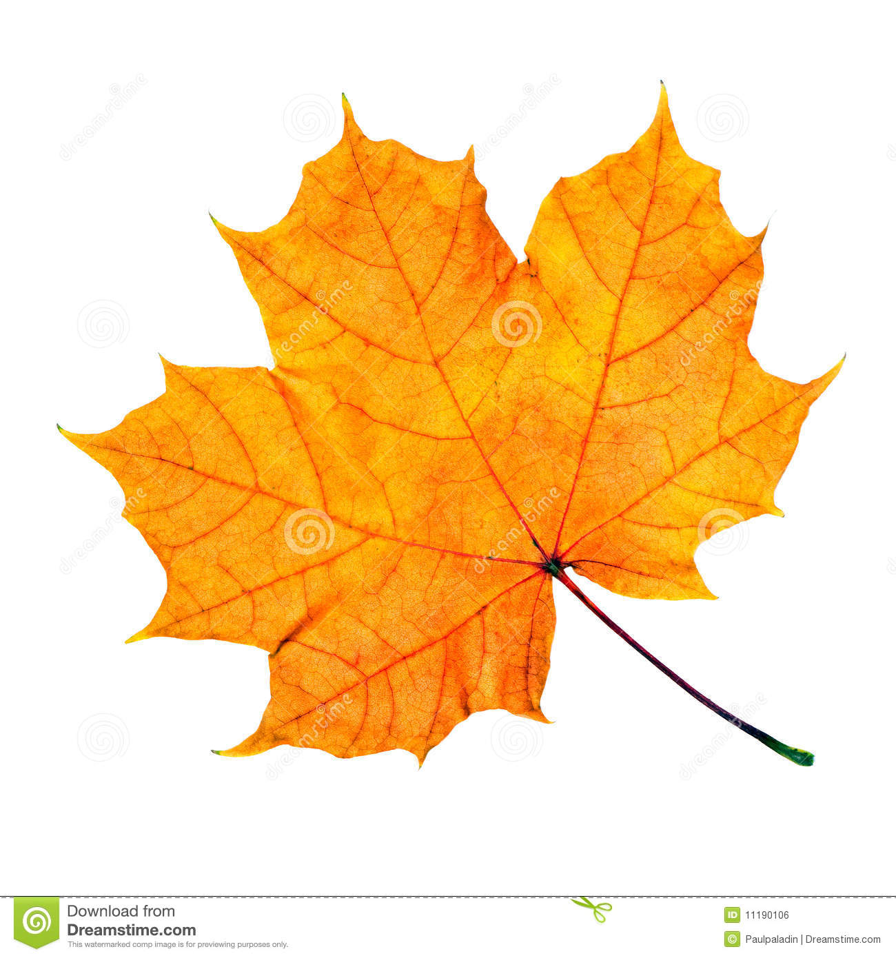 Maple Fall Leaf Royalty Free Stock Image - Image: 11190106