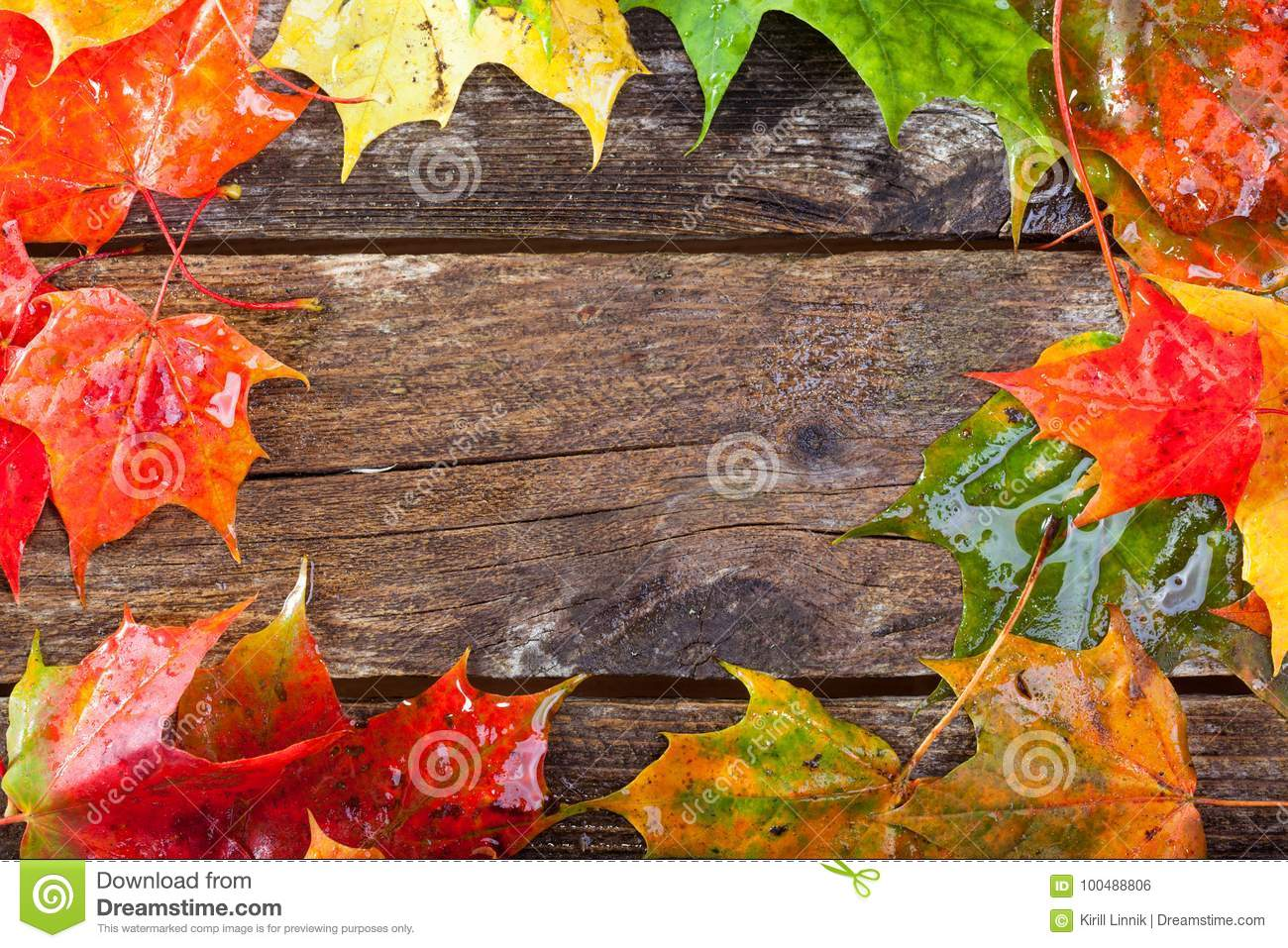 Download Maple foliage on the able stock photo. Image of copy - 100488806
