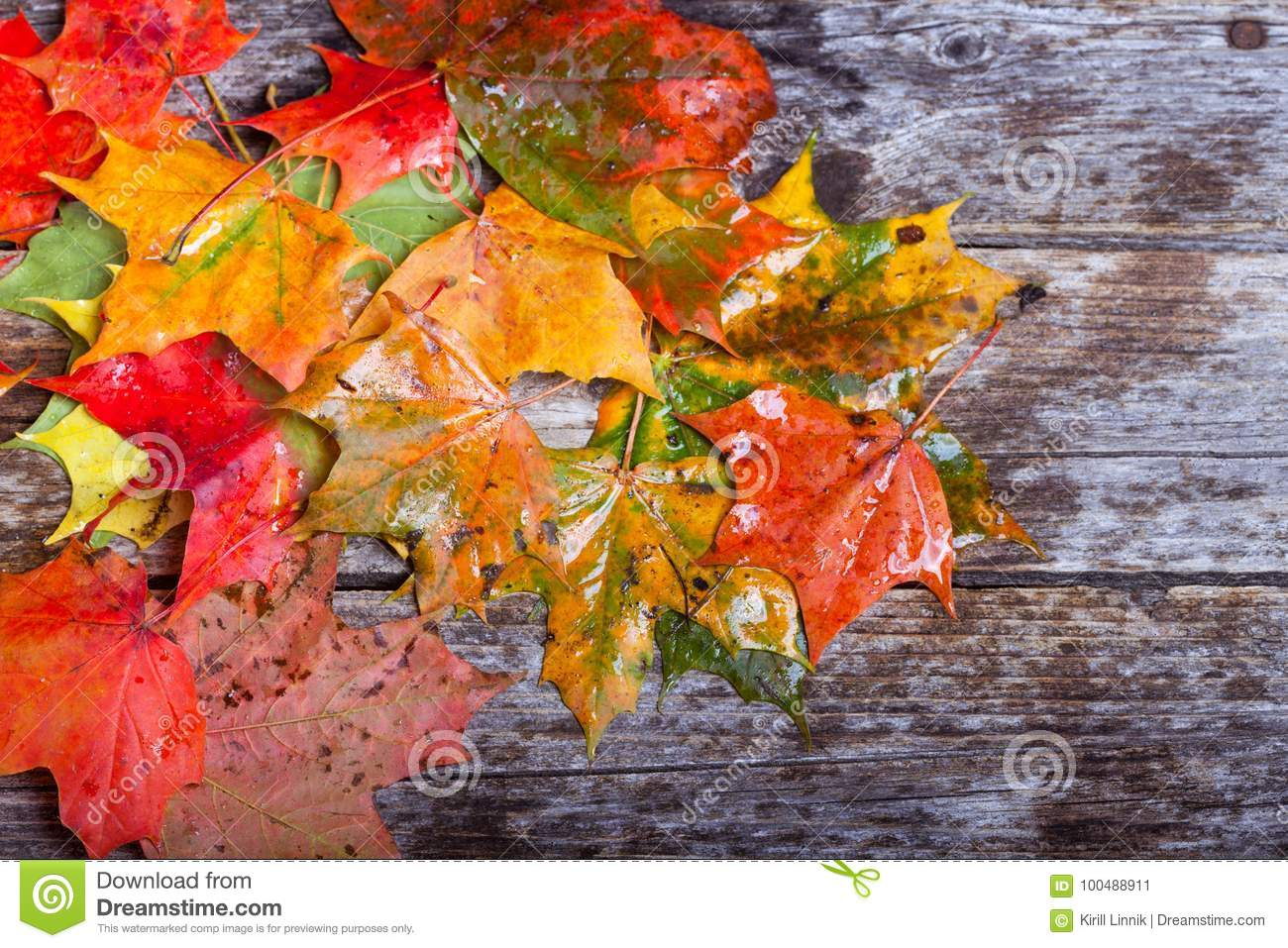 Download Maple foliage on the table stock image. Image of green - 100488911