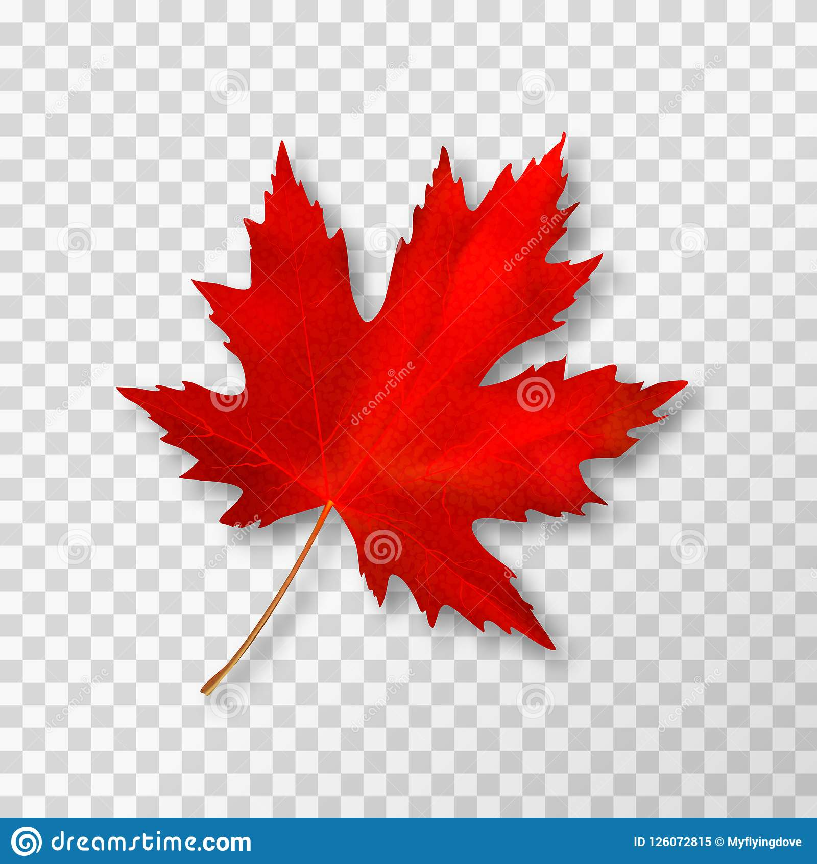 Maple Leaf Isolated On Transparent Background Bright Red Autumn Realistic Leaf Vector Illustration Eps 10 Stock Image Image Of Nature Pattern 126072815