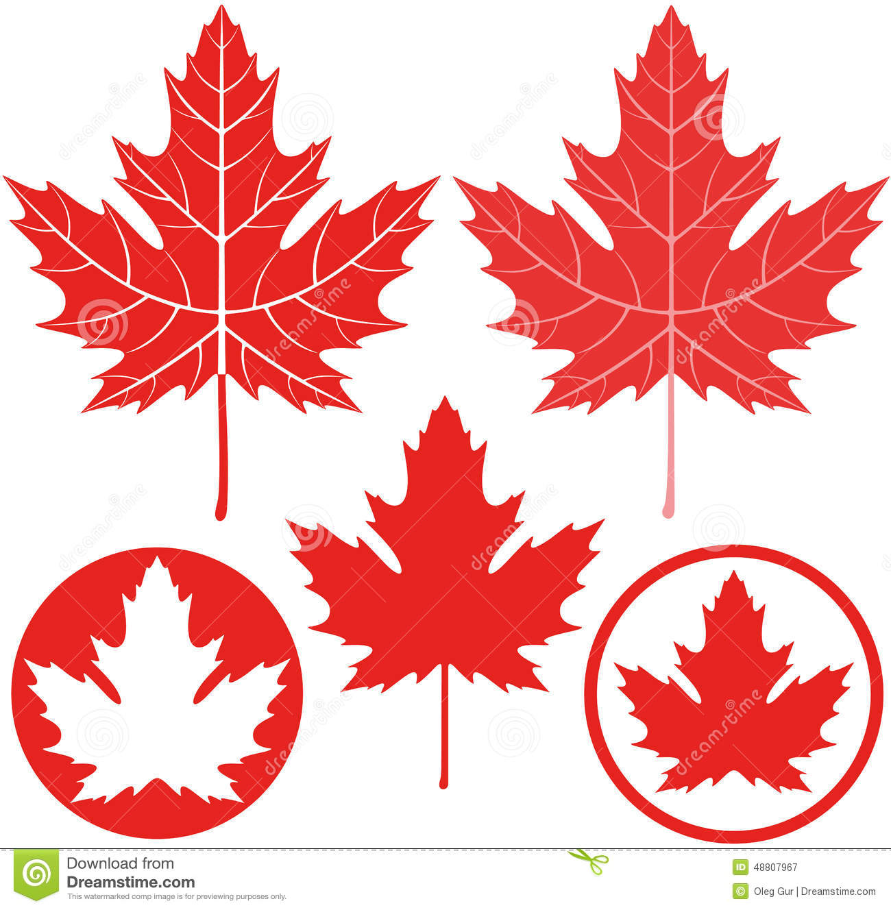 Maple Leaf Stock Vector - Image: 48807967
