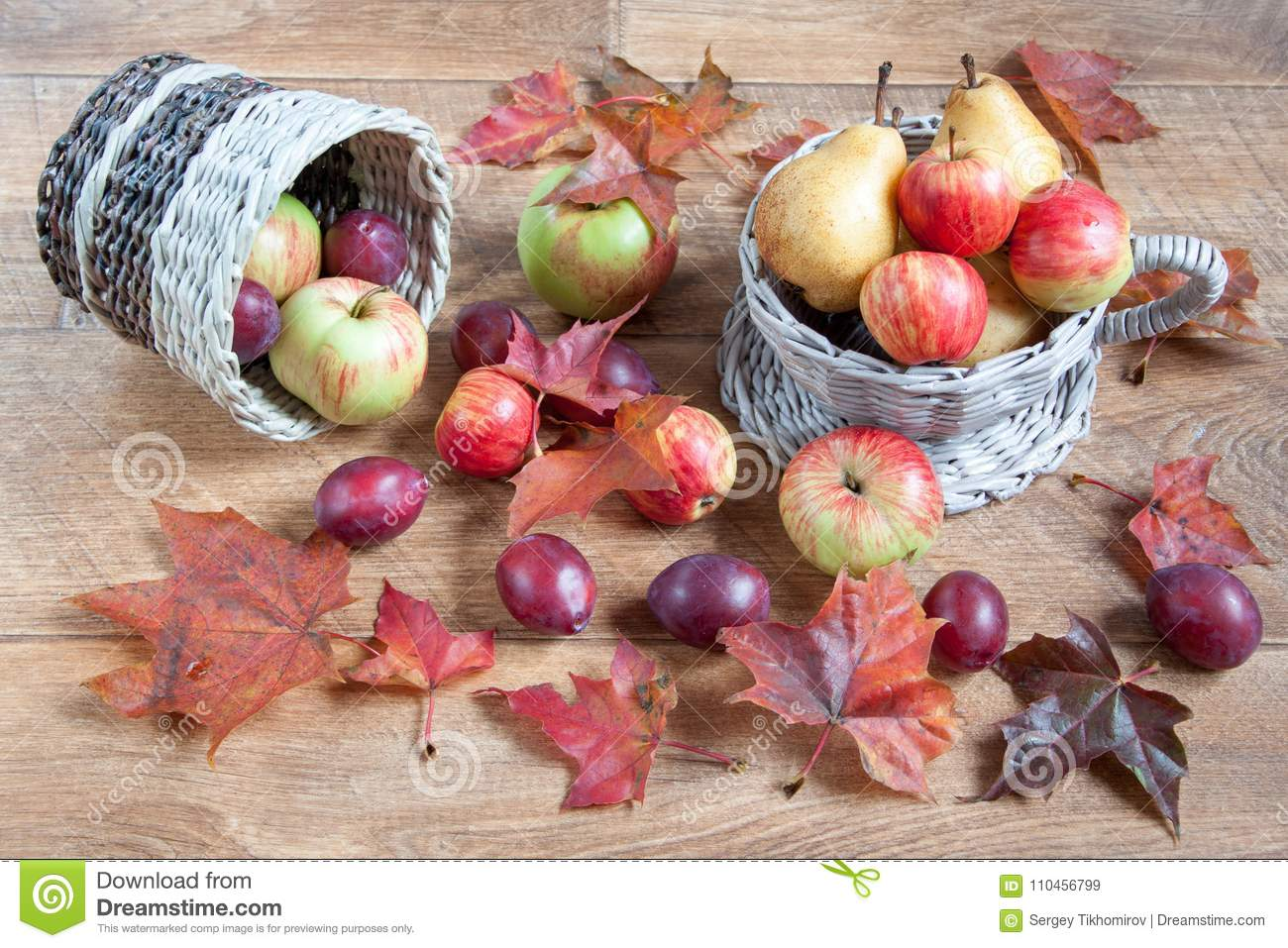 Maple Leafs Apples Pears And Other Gifts Of Nature Autumn Still Life Stock Image Image Of Green Background 110456799