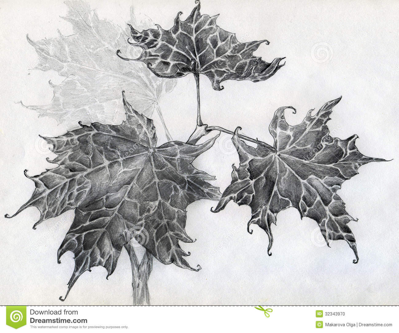Sketch of four maple leaves growing together on one branch