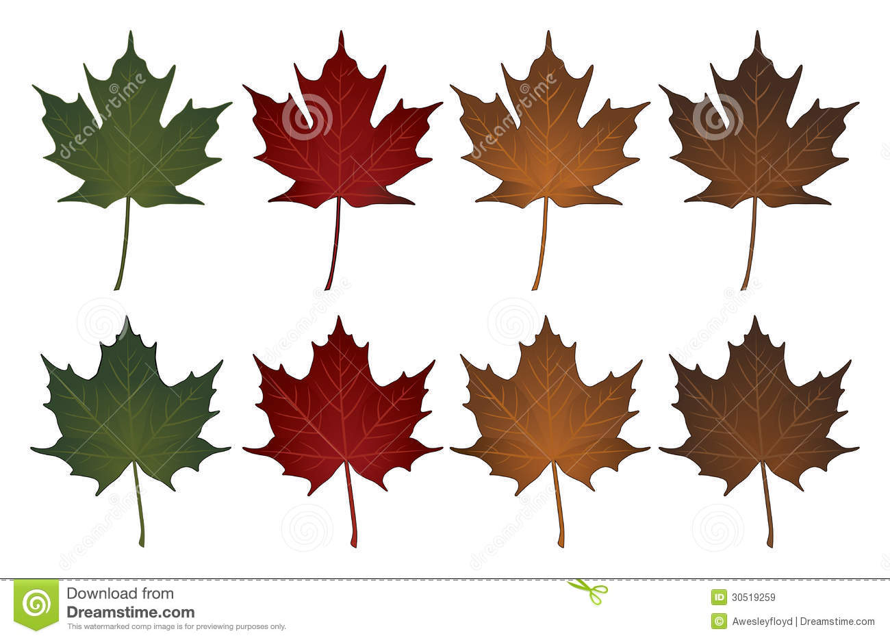 Maple LeavesSugar And Norway Royalty Free Stock Images Image - Norway maple vs sugar maple