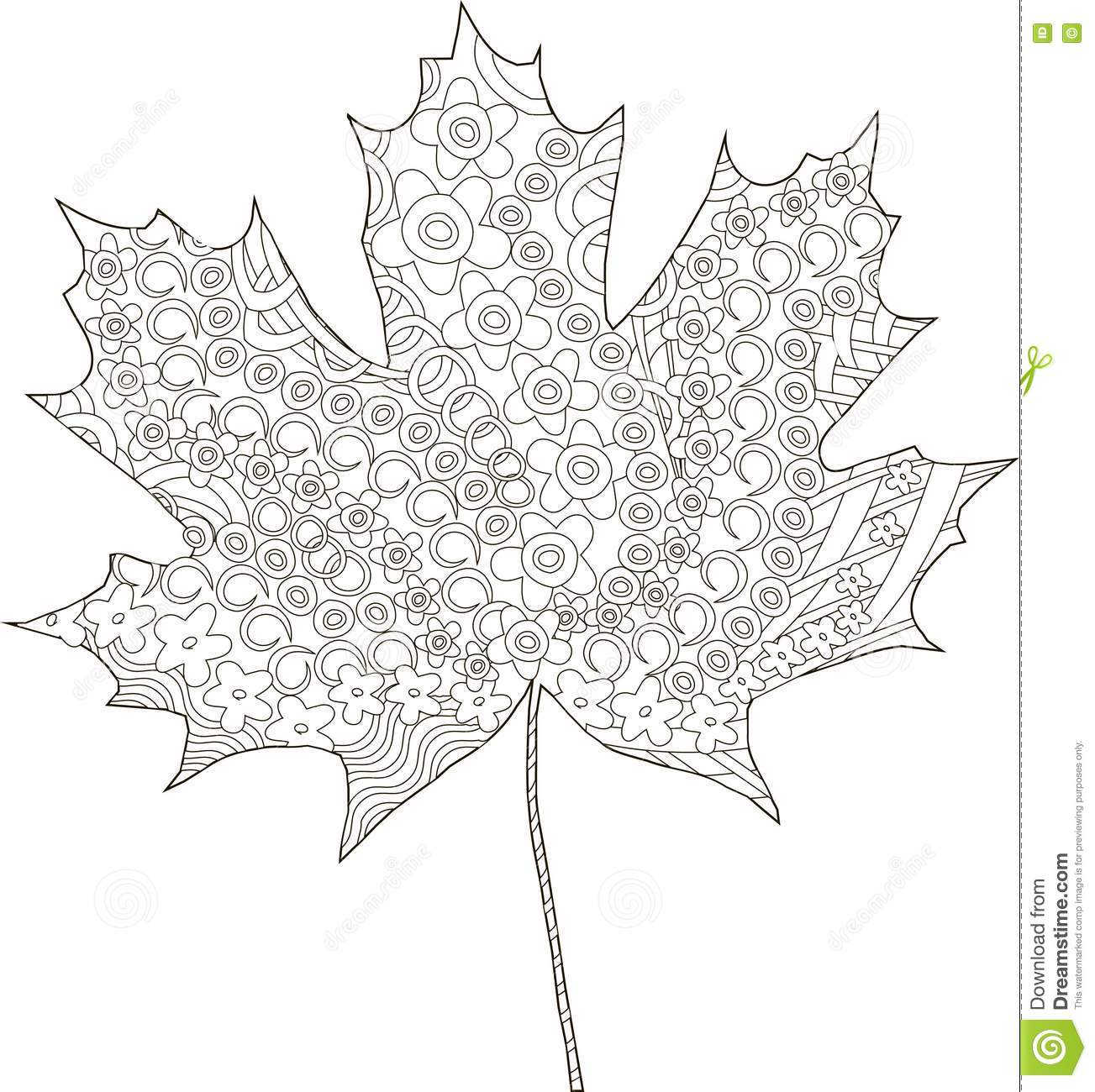 Maple Ornaments Leaf Sketch, Thin Black Line On White, Coloring Page ...