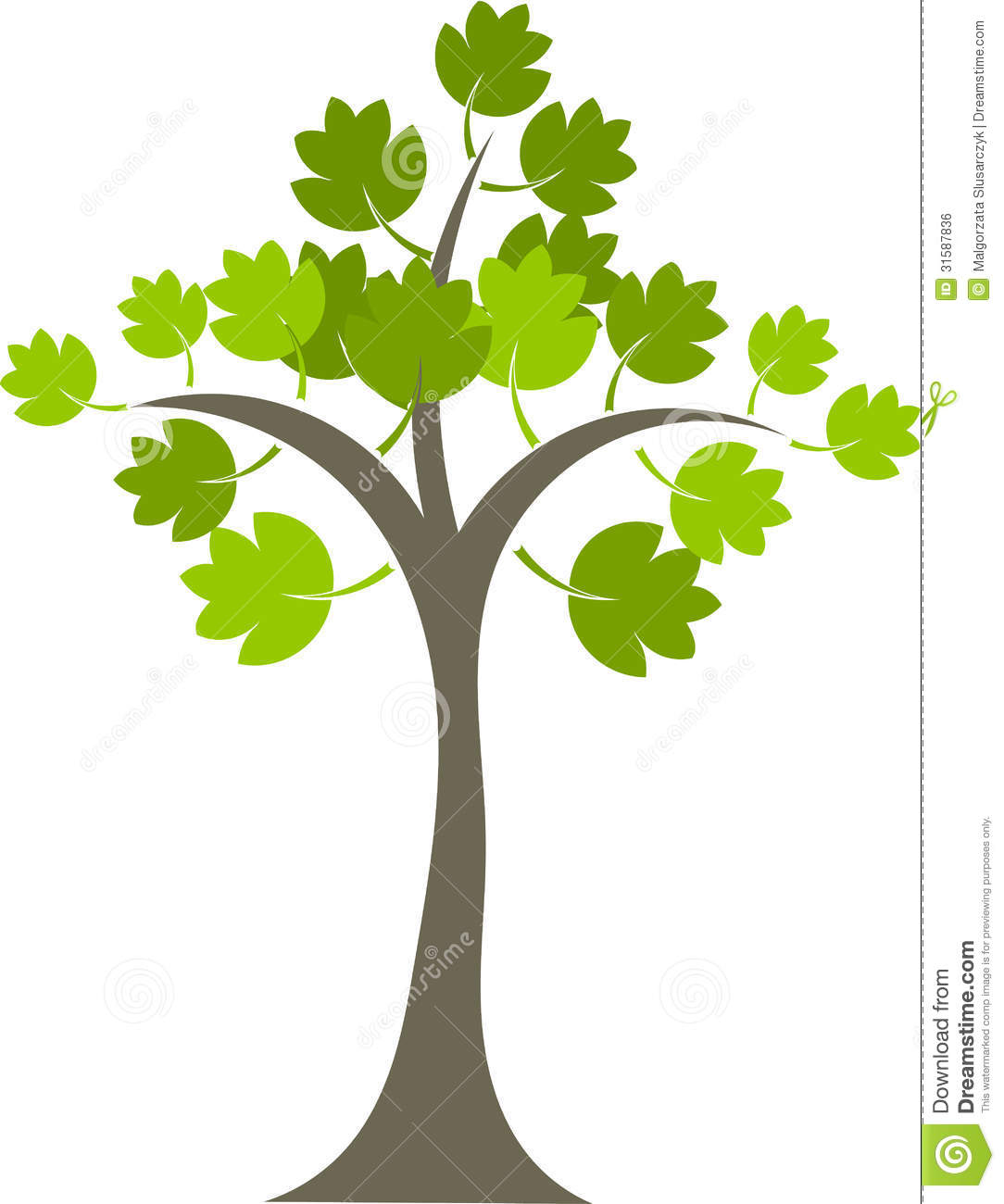 Maple Tree Royalty Free Stock Image Image 31587836
